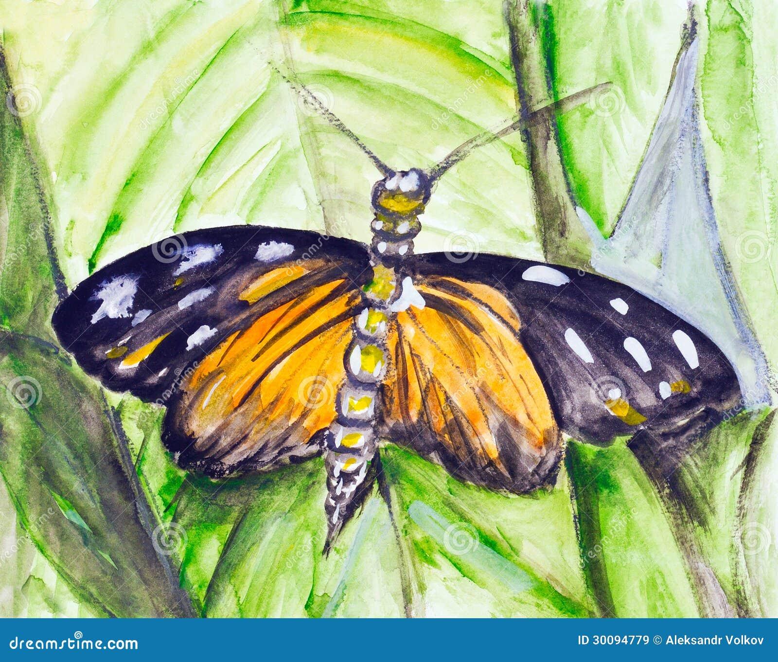 Tropischer Schmetterling des Aquarells