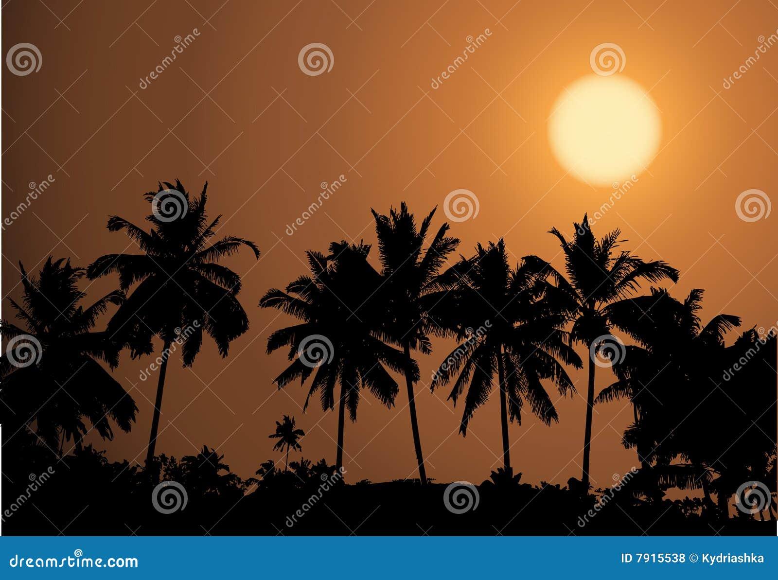 Tropischer Sonnenuntergang, Palmeschattenbild