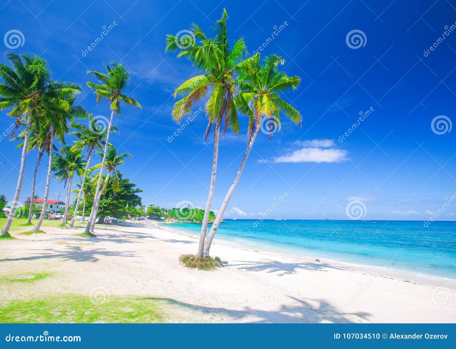 Tropischer Strand mit Kokosnusspalme