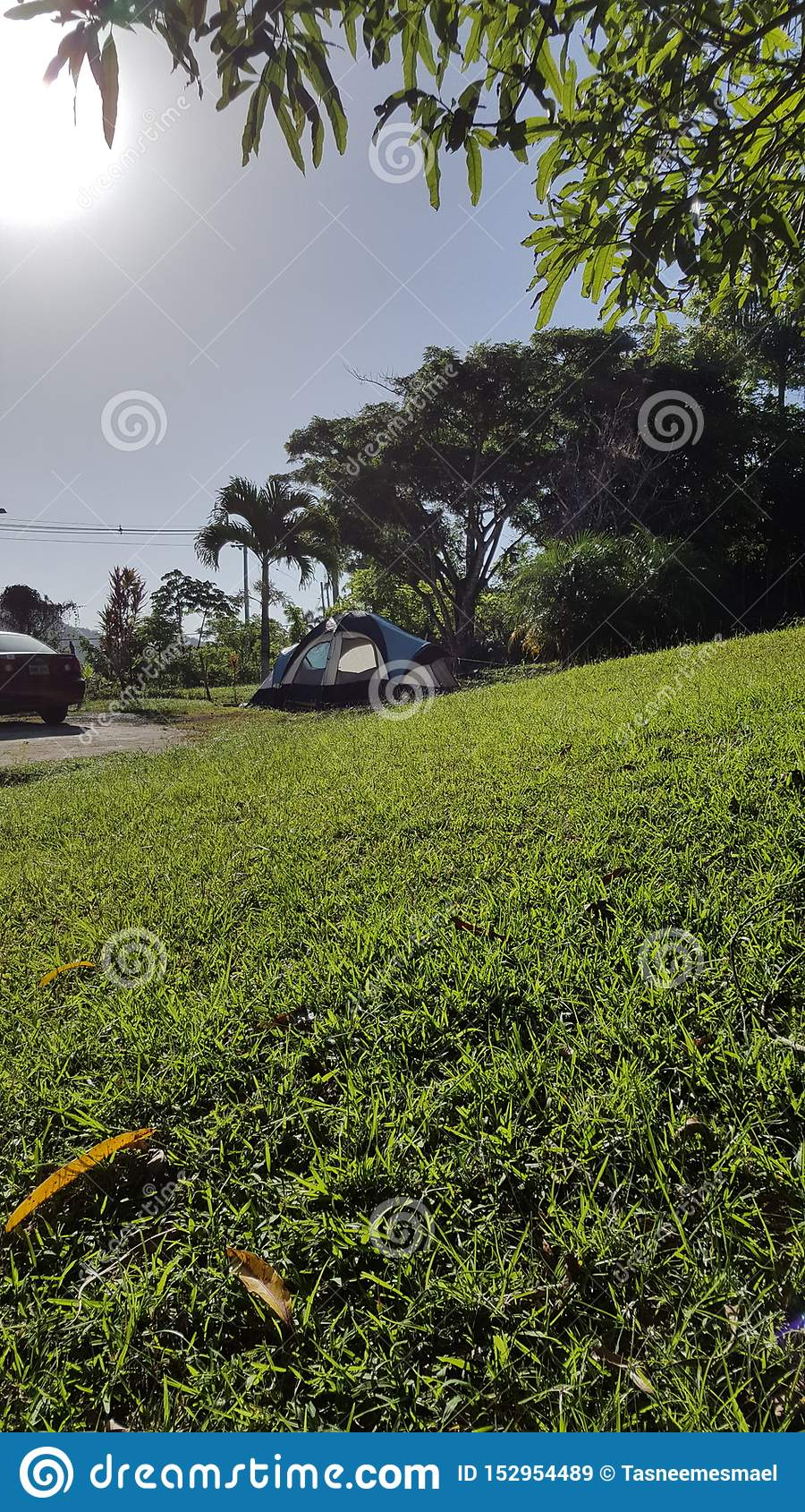 Tropischer Wald in San Sebastian, Puerto Rico