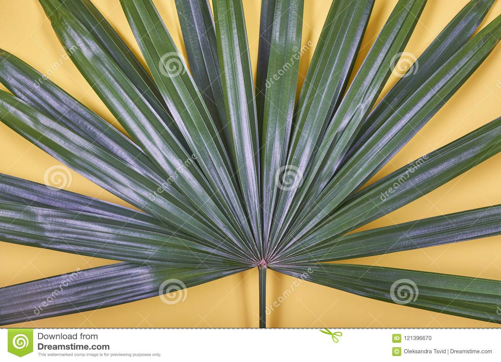 Tropisches Palmblatt auf gelbem Pastellhintergrund