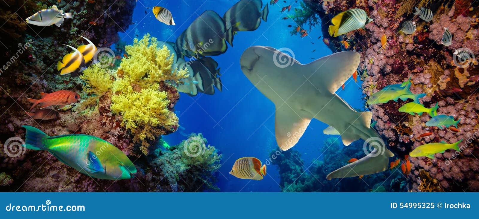 Tropisk Anthias fisk med netto brandkoraller och haj