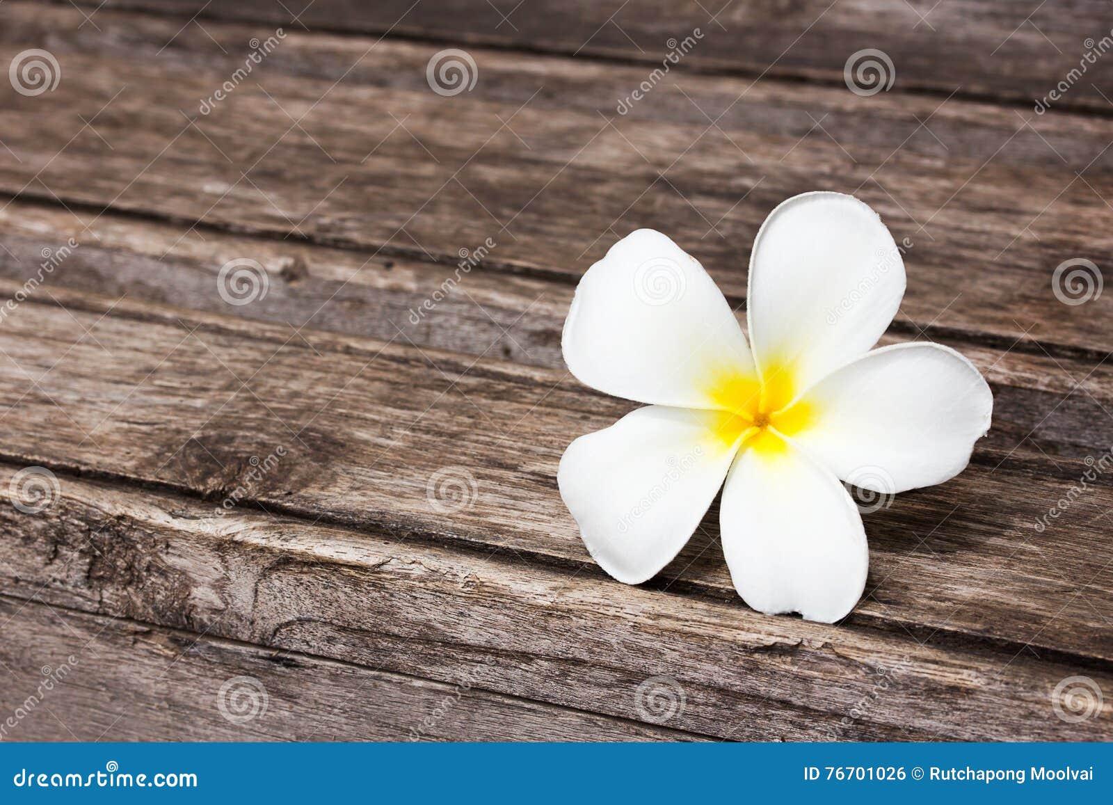 Tropisk blommafrangipani på trä