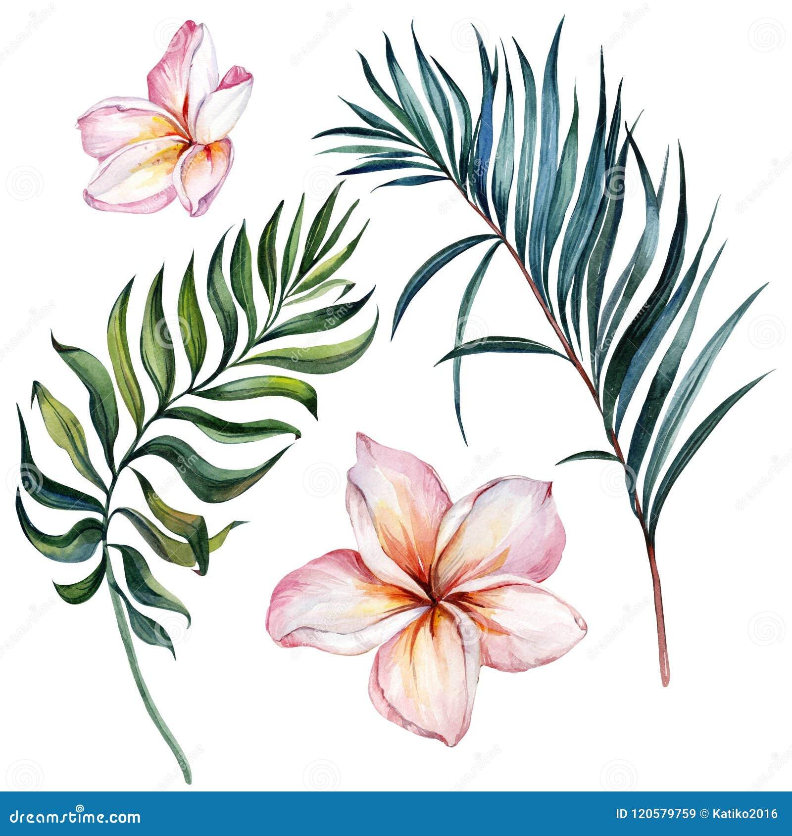 Tropisk exotisk blom- uppsättning Härliga rosa plumeriablommor och gröna palmblad som isoleras på vit bakgrund