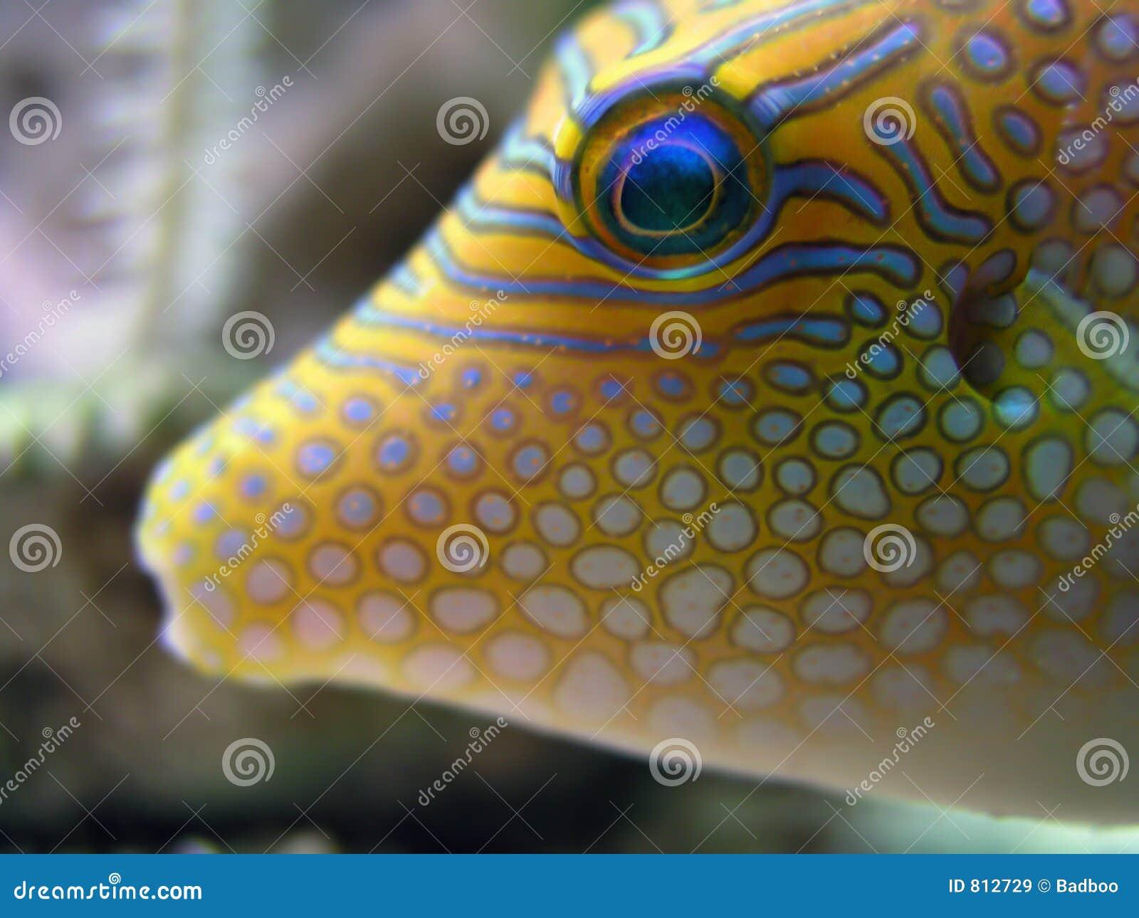 Tropisk fisk