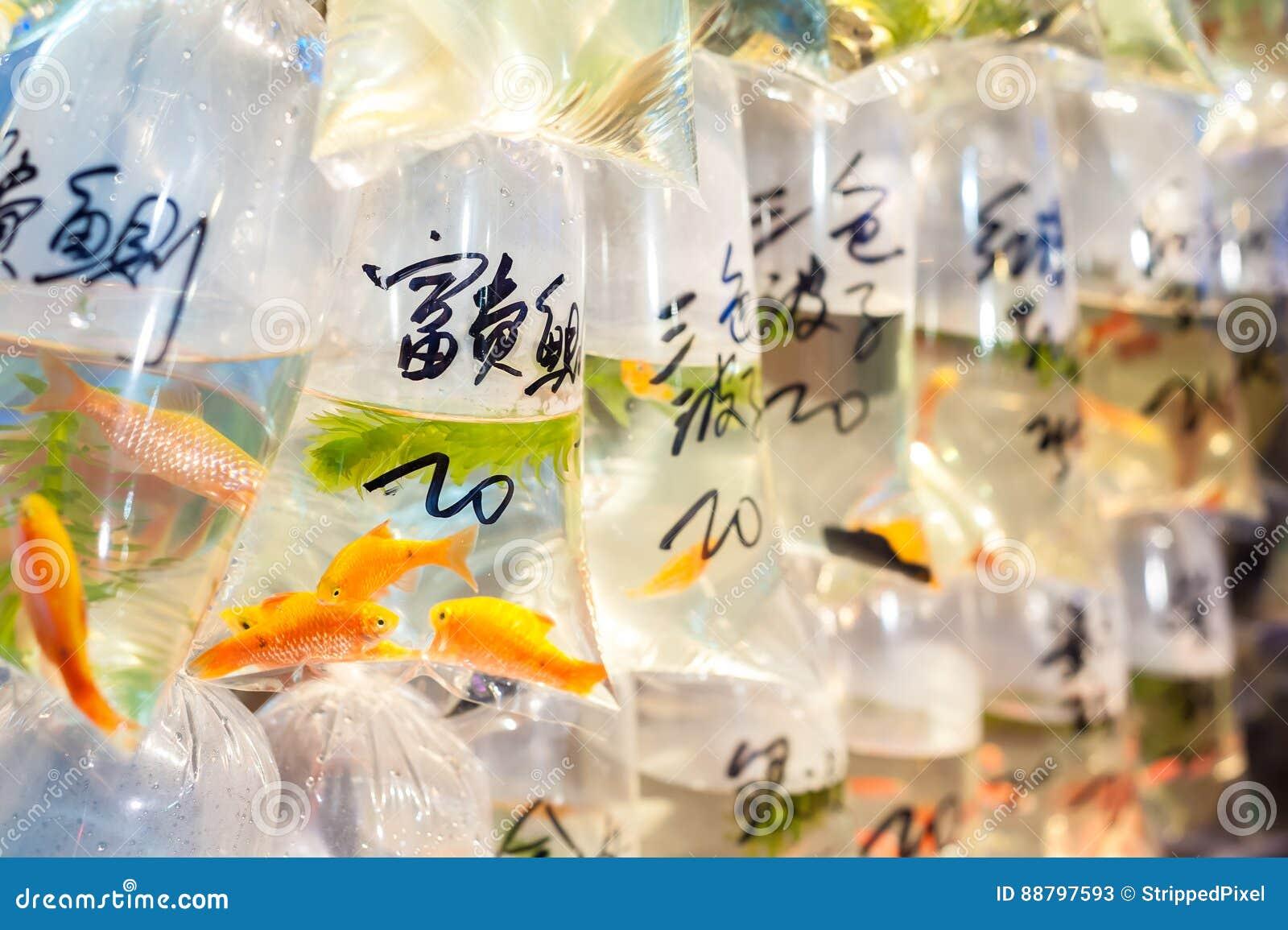 Tropisk fisk som är till salu på marknaden för guldfisk för Hong Kong ` s Tung Choi Street, Mong Kok, Hong Kong