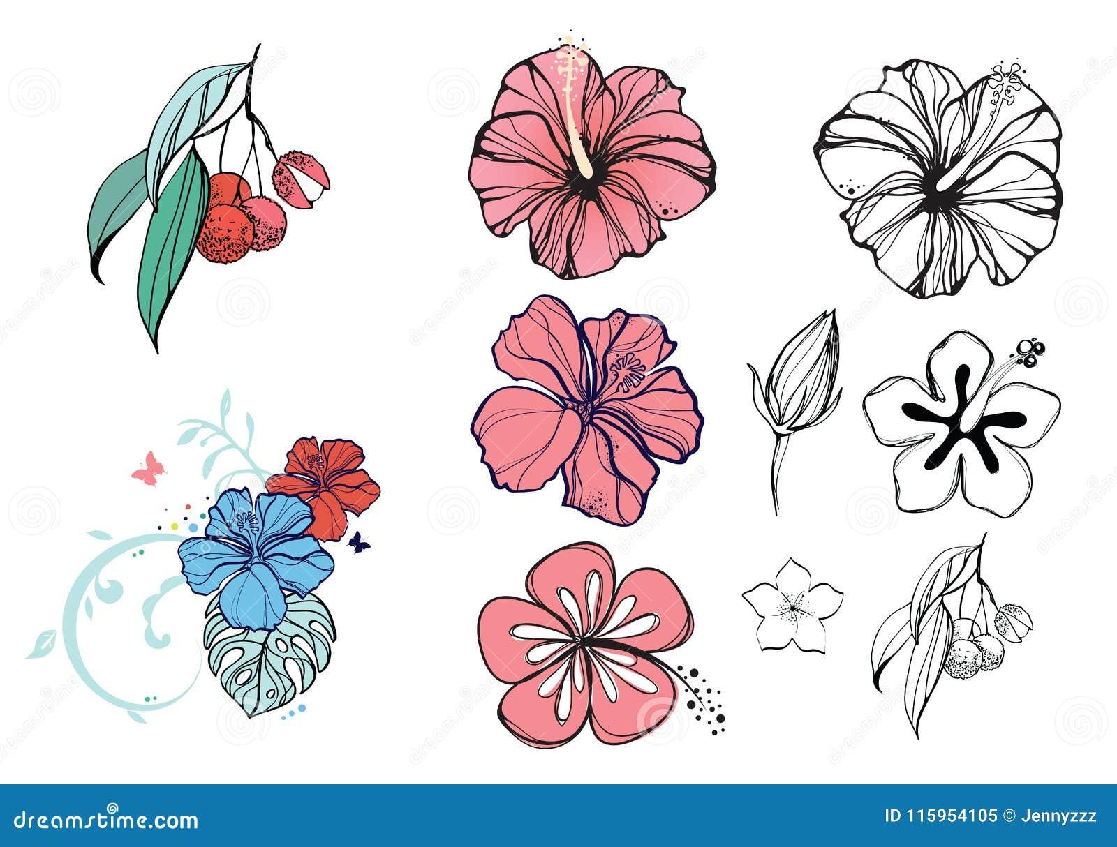 Tropisk illustration med blommor och bär, hibiskus, litchiplommon