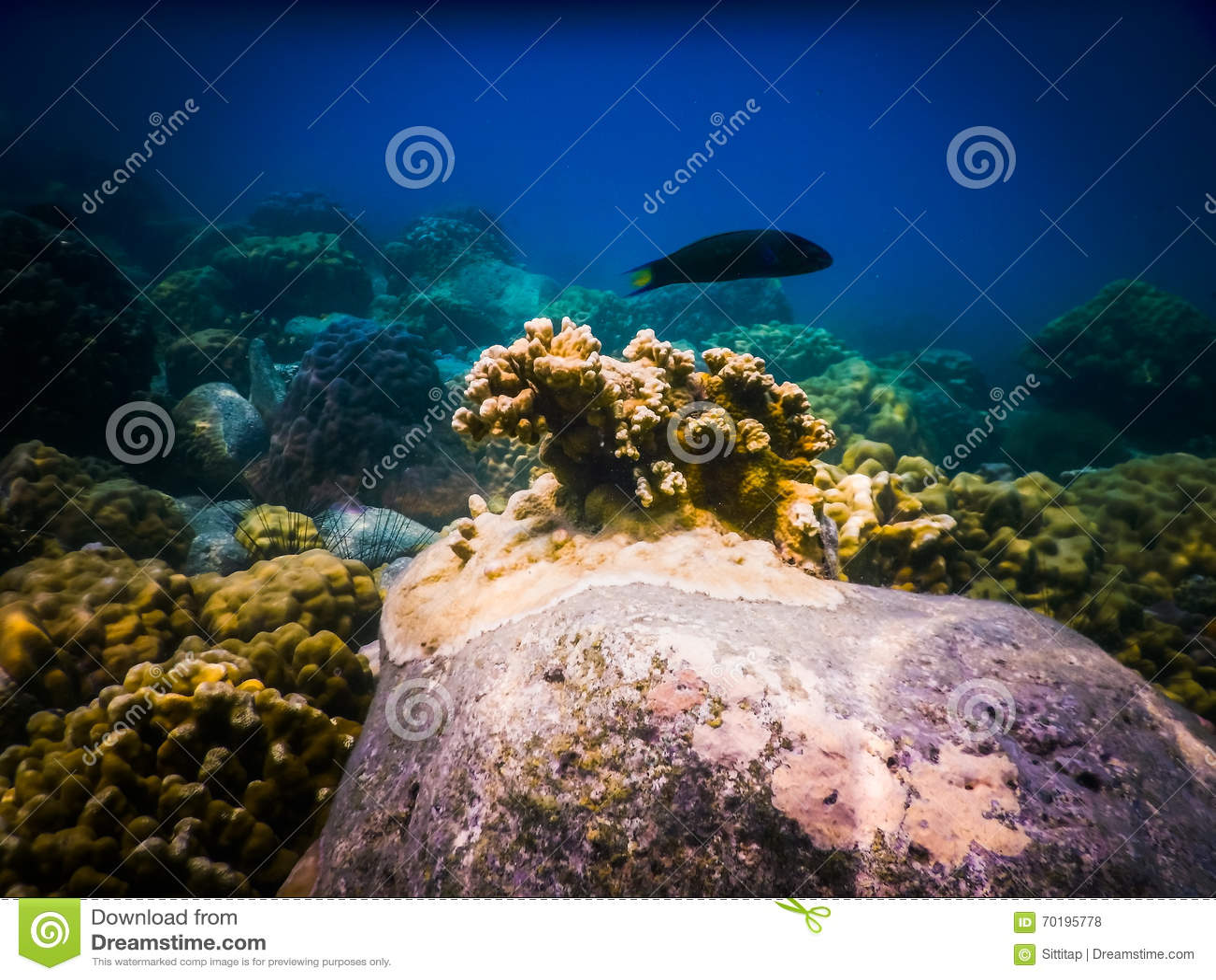 Tropisk korallrev i Thailand