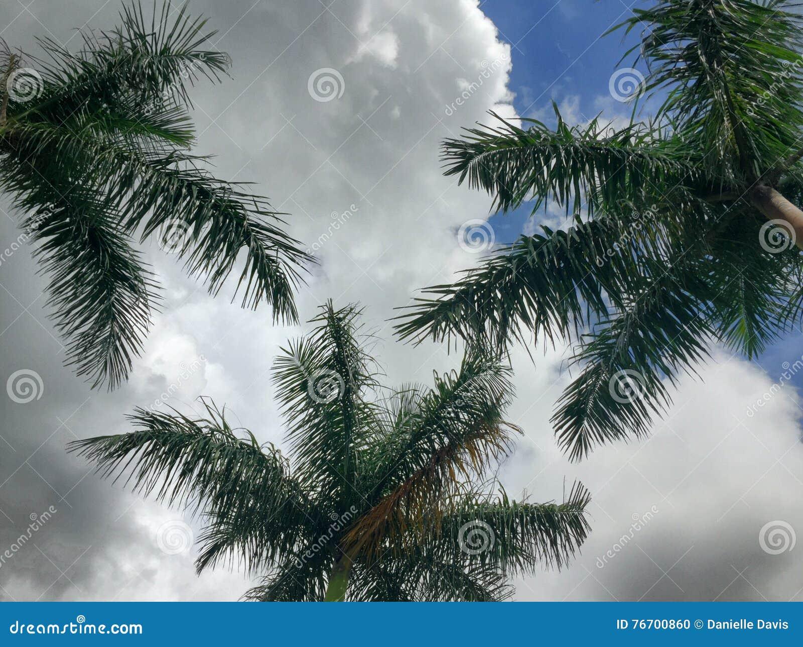 Tropisk molnig dag