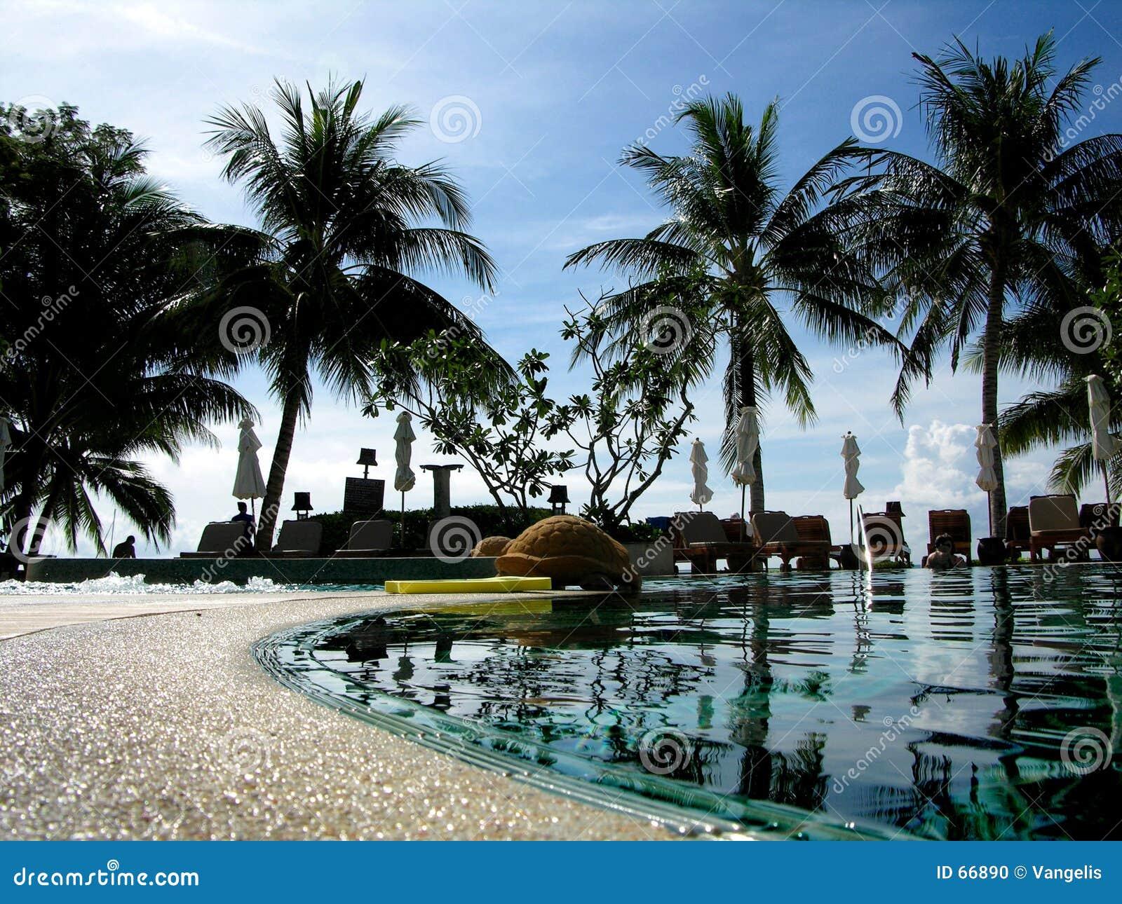 Tropisk pöl
