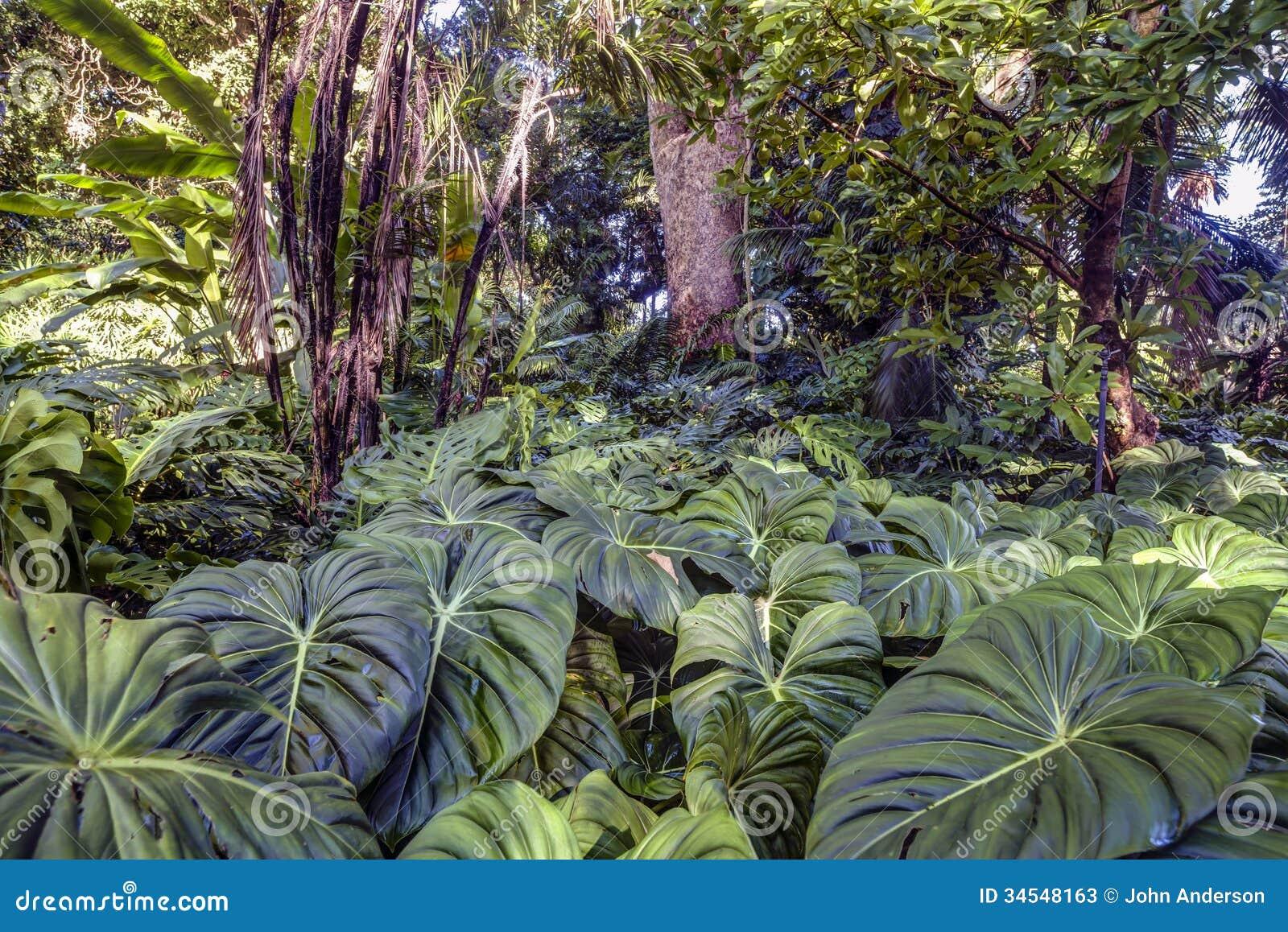 Tropisk rainforest