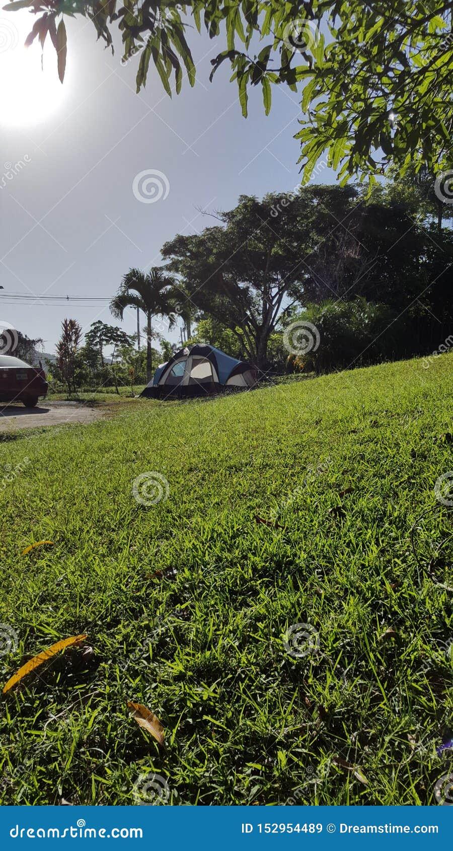 Tropisk skog i San Sebastian, Puerto Rico