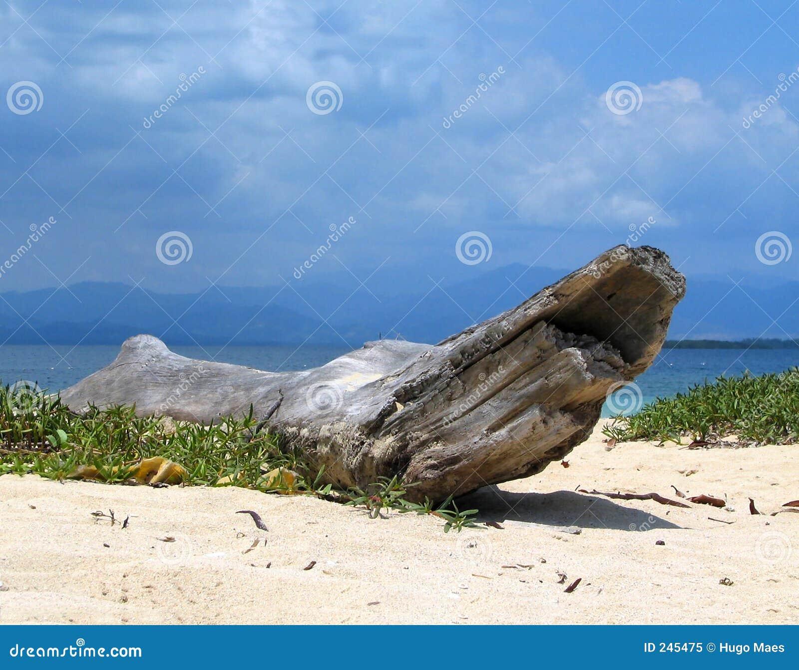 Tropisk stranddriftwood