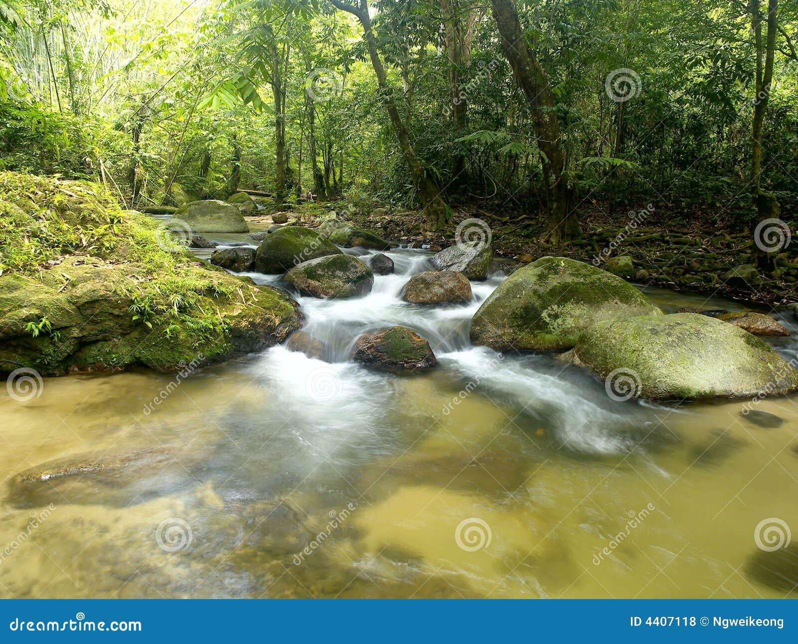 Tropisk vattenfall för berg