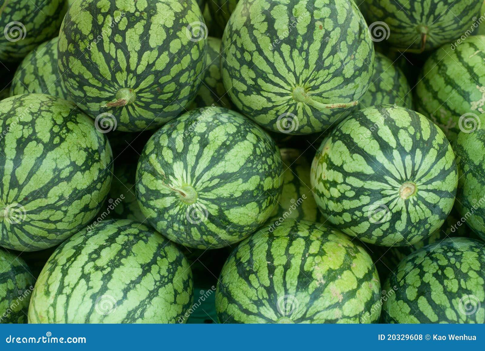 Tropisk vattenmelon