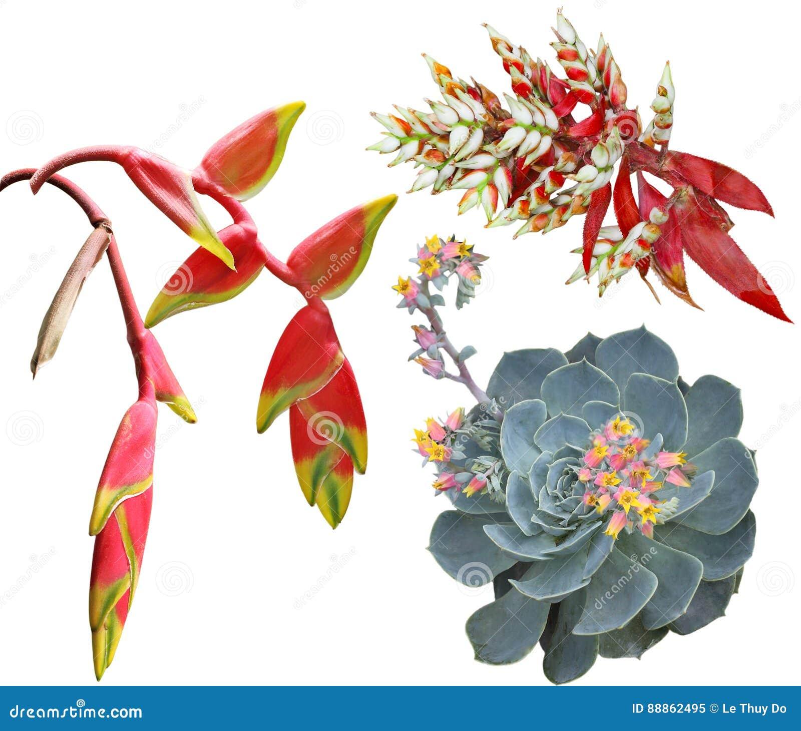 Tropiska exotiska blommor