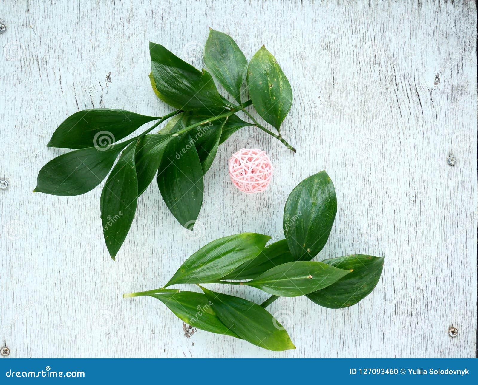 Tropiskt blad och blomma Den blom- lägenheten lägger på den lantliga bakgrunden Bästa sikt för naturlig ram