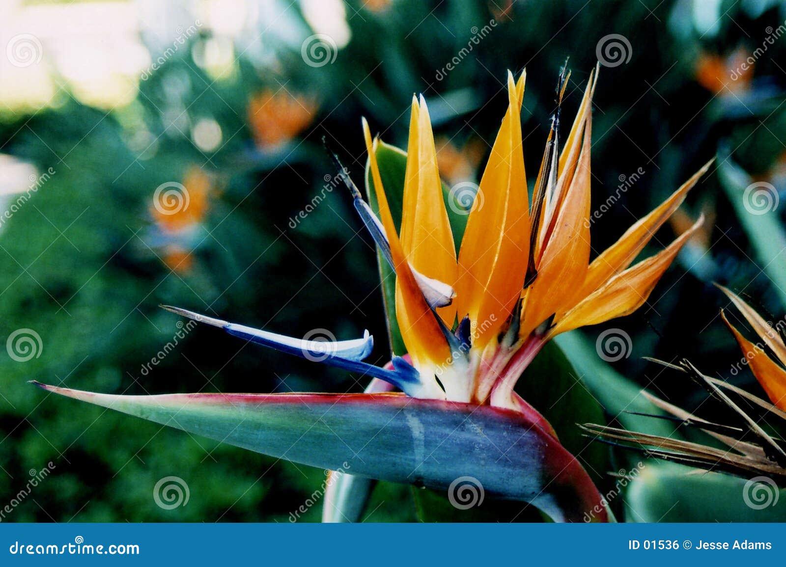Tropiskt fågelblommaparadis