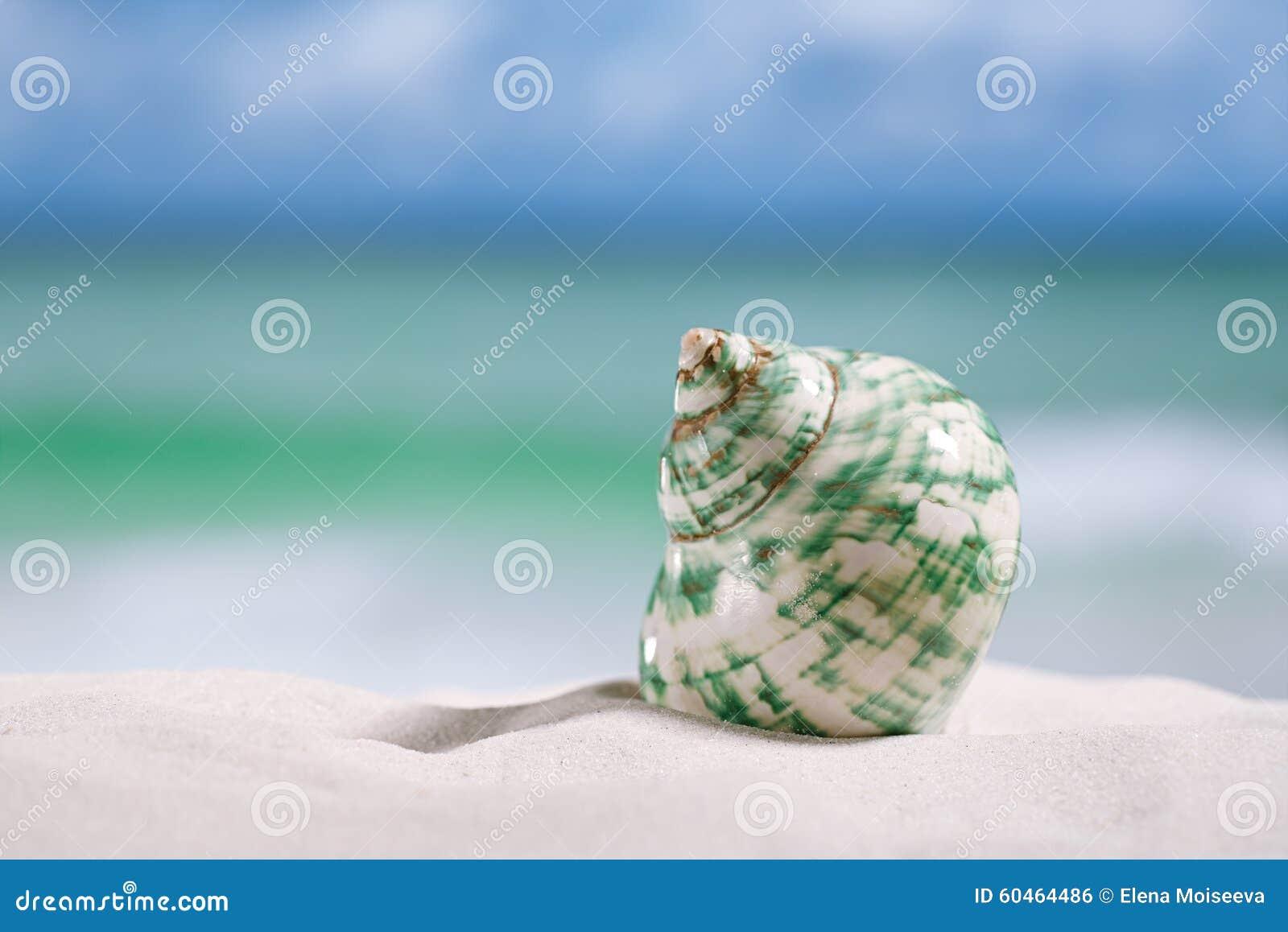 Tropiskt havsskal på vit Florida strandsand