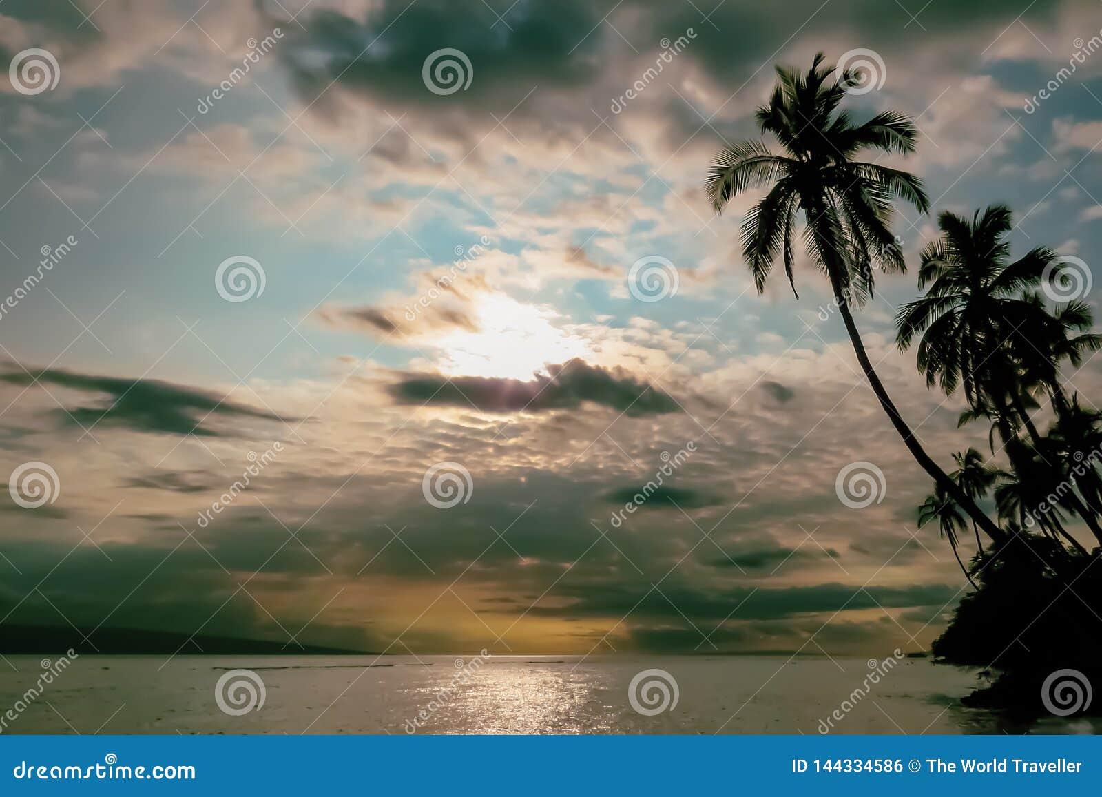 Tropiskt landskap, solnedgång över havet, konturer av palmträd, Hawaii, USA