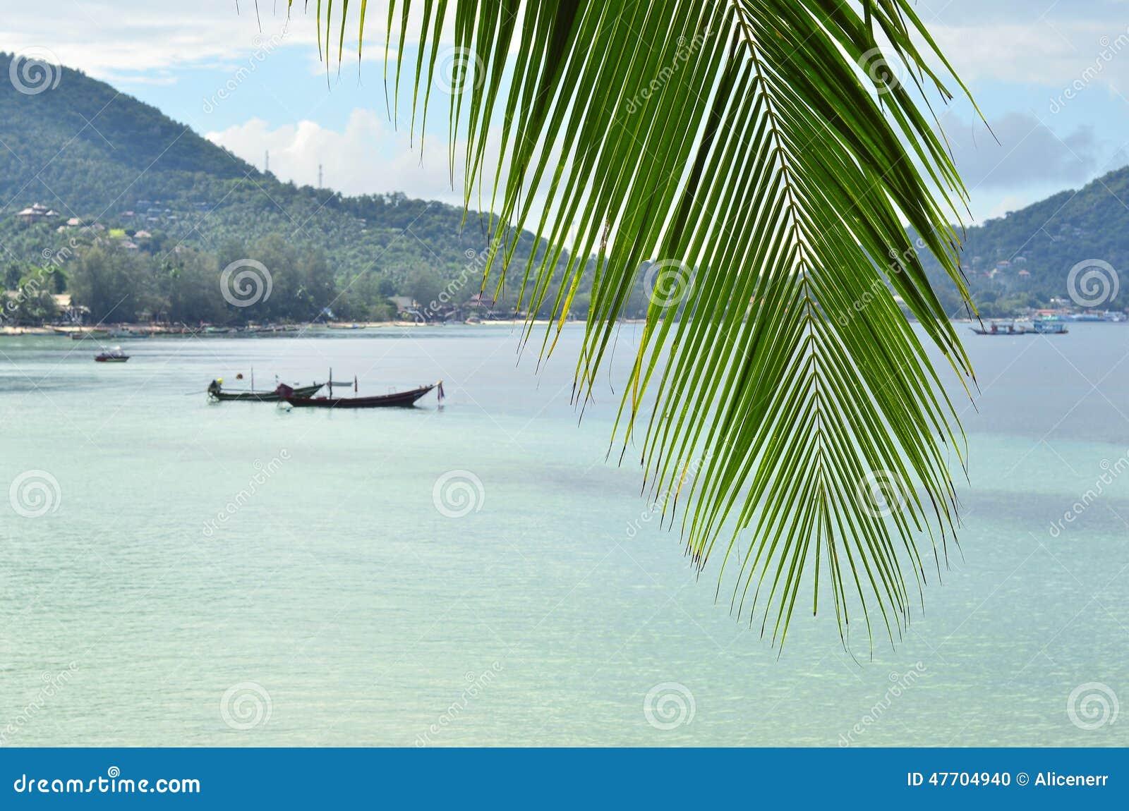 Tropiskt paradis - closeup av palmblad- och turkoshavsvatten