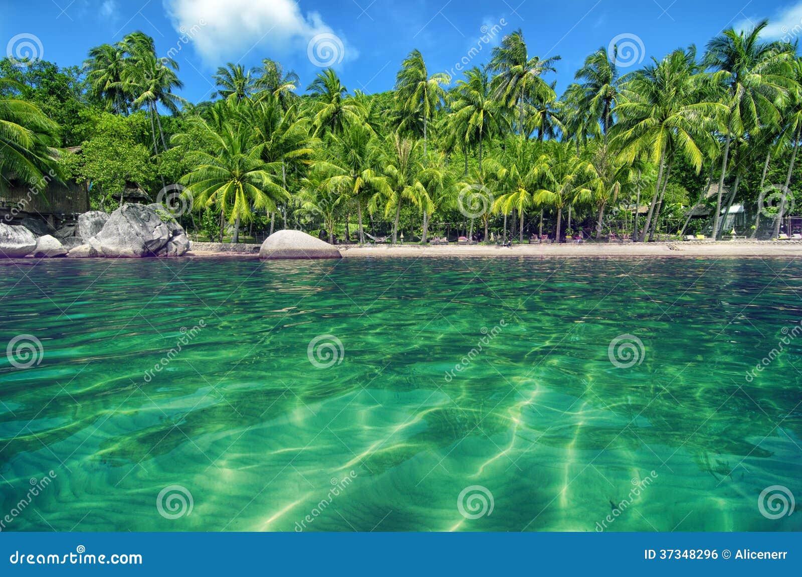 Tropiskt paradis med turkosvatten och frodig mer grön