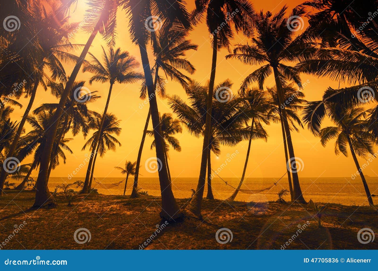 Tropiskt paradis: solnedgång på sjösidan - mörka konturer av p