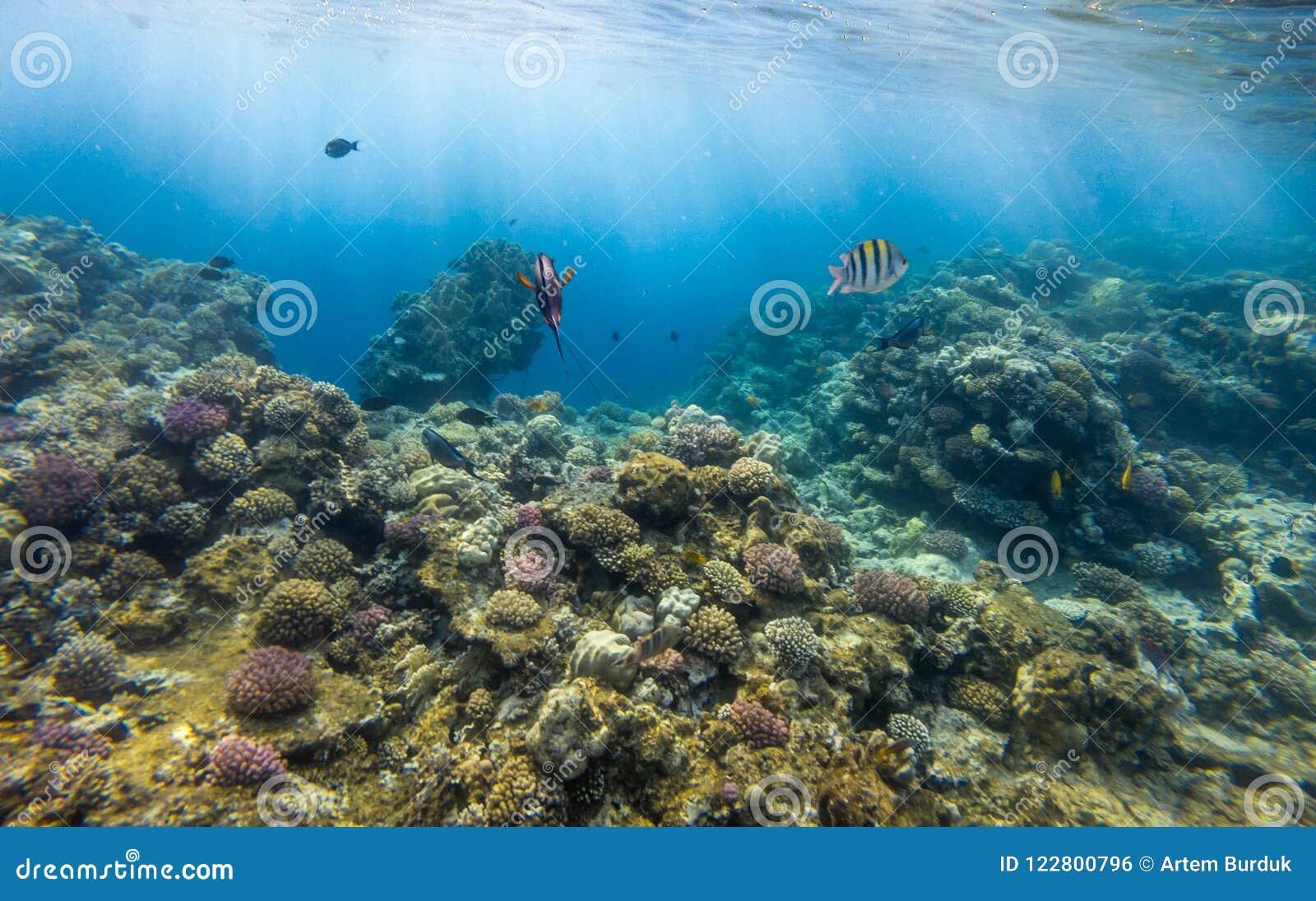 Tropiskt solljus för korallfiskrev