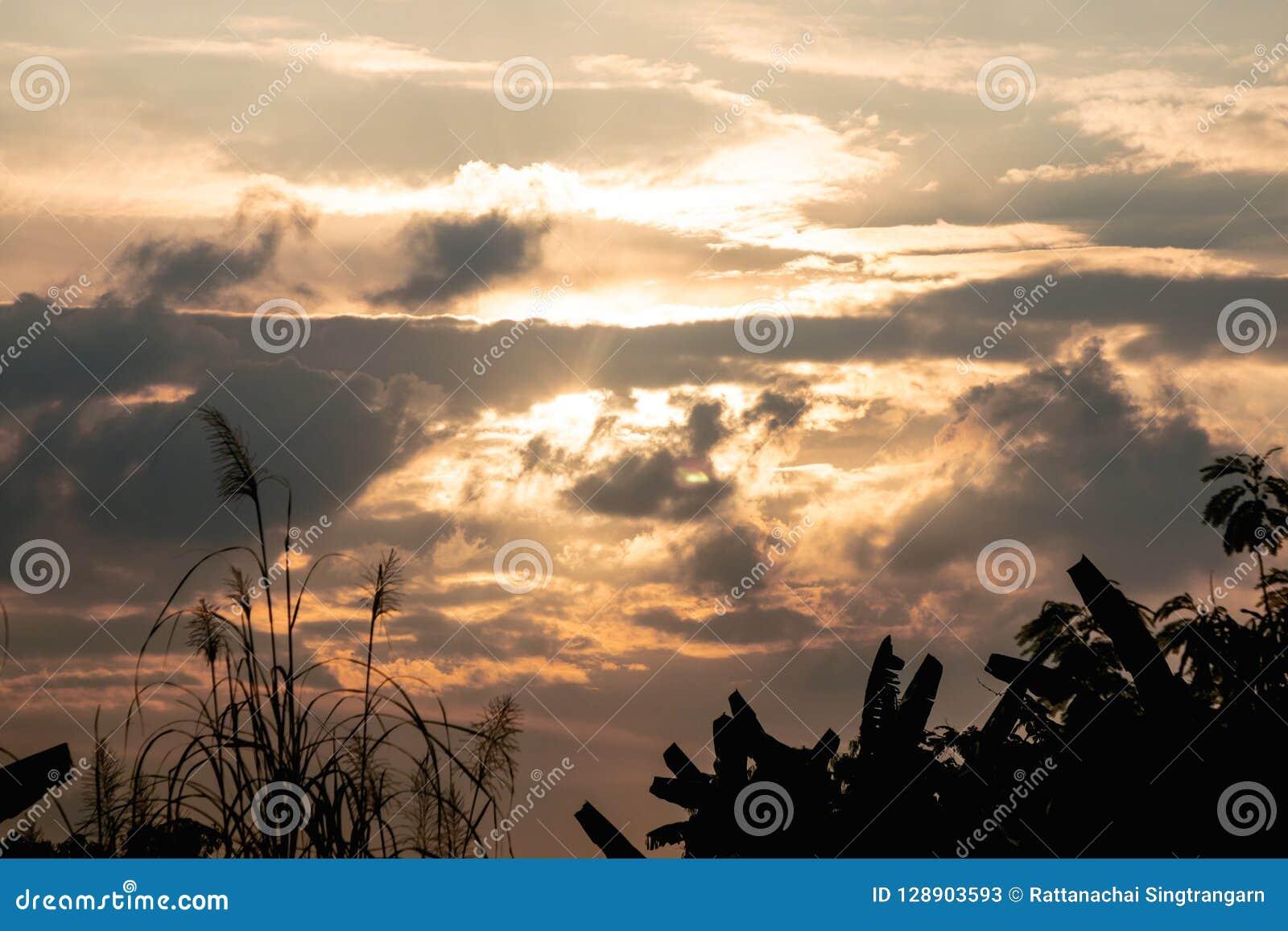 Tropiskt träd för kontur och guld- himmelskymning Lantlig landskapsiktsbakgrund