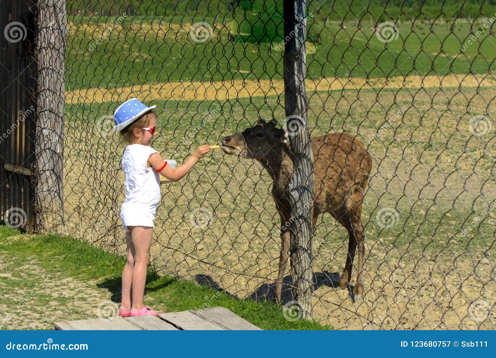 Troszkę karmi młodego rogacza w zoo w lecie podczas t dziewczyna