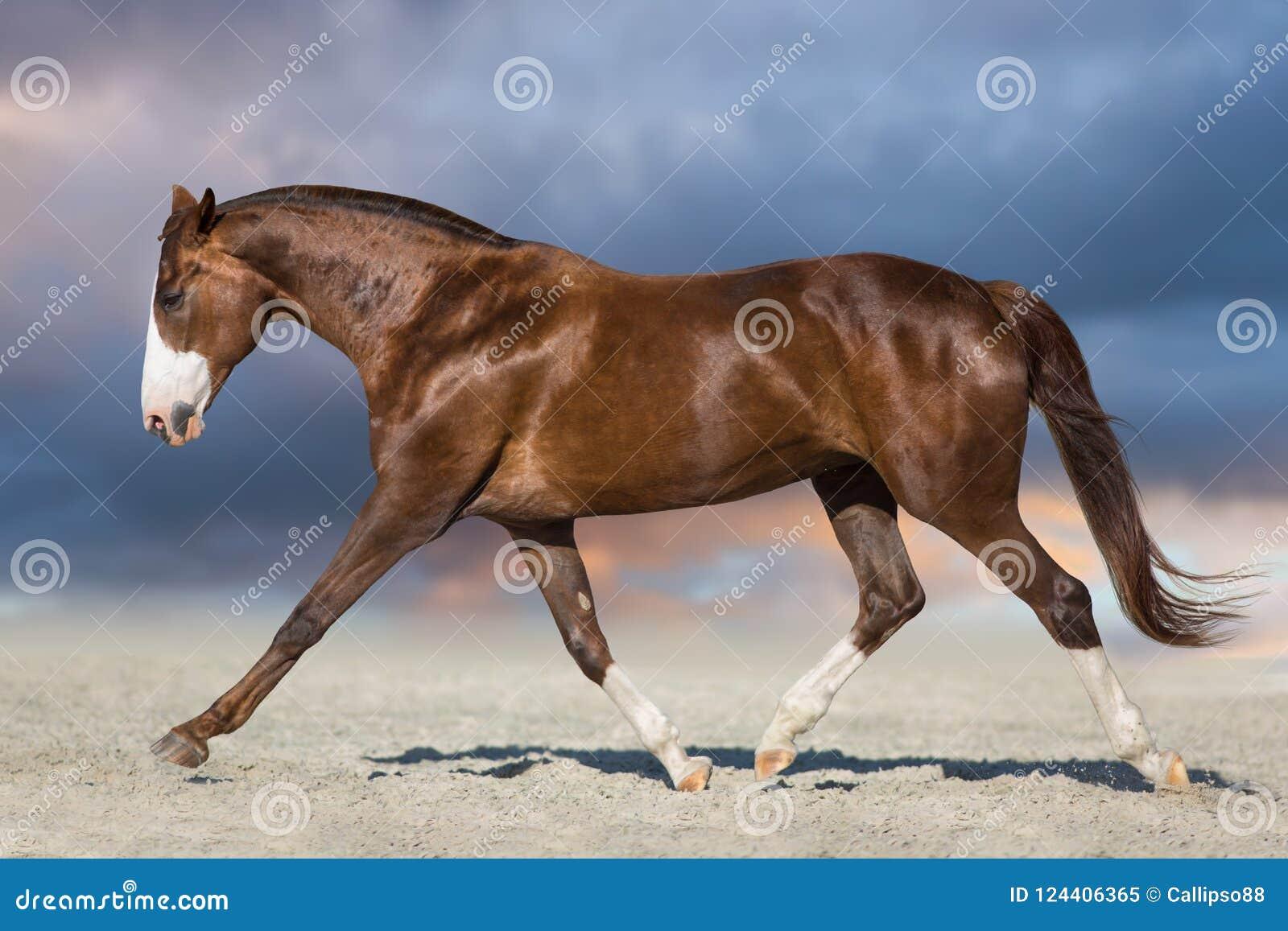 Trote vermelho da corrida do cavalo