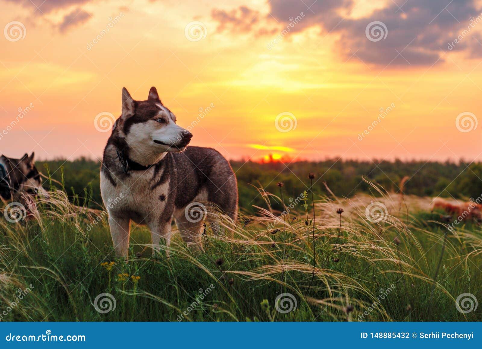 Trots schor hond die aan de rechterkant kijken