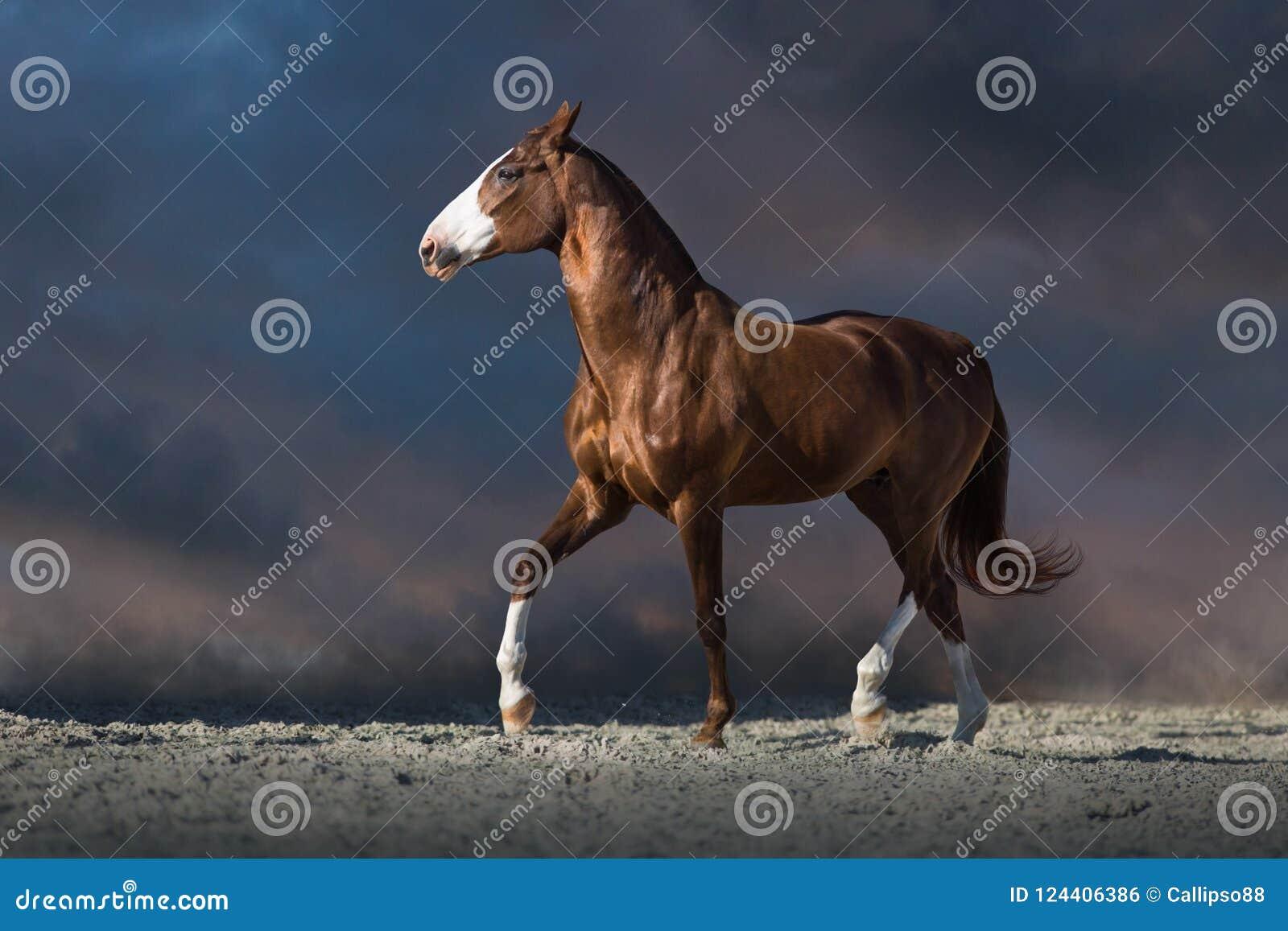 Trottare rosso del cavallo