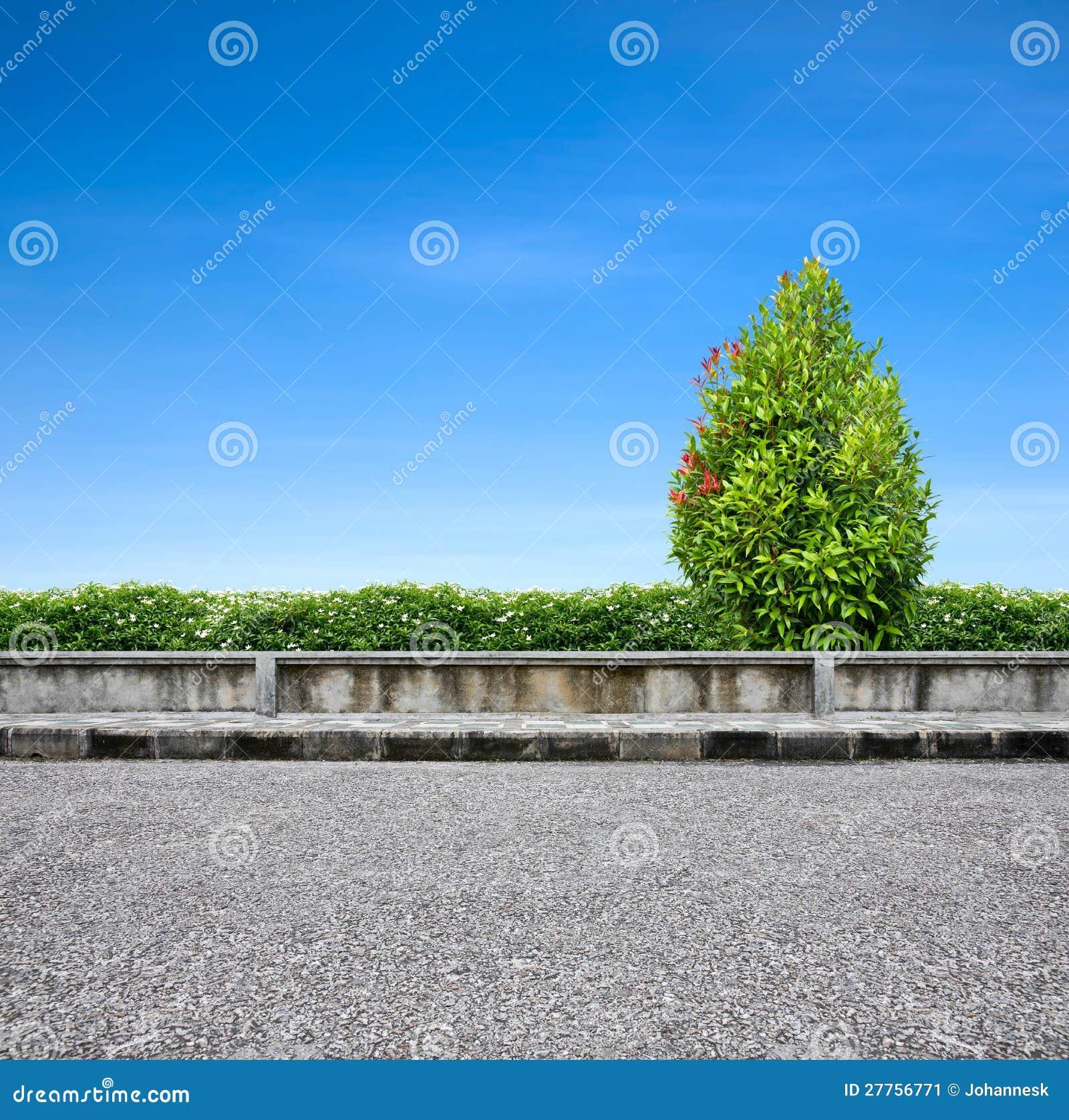 Trottoir et arbre de bord de la route