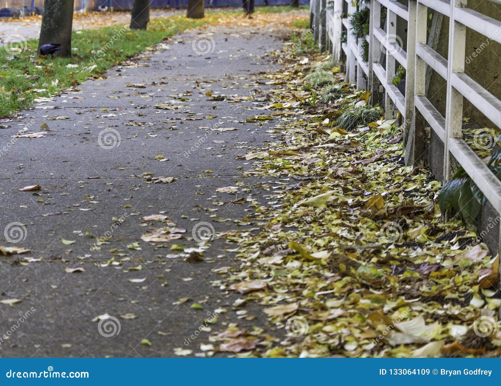 Trottoir garni des feuilles tombées
