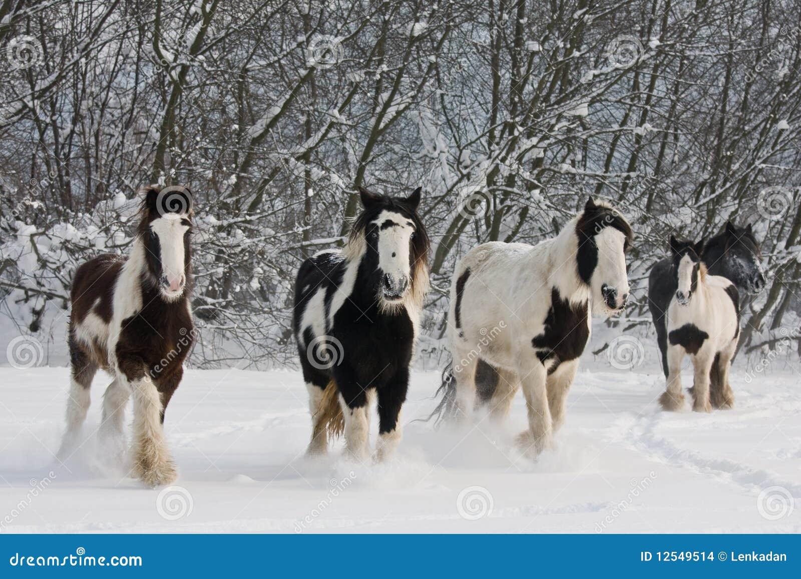 Troupeau de chevaux courants