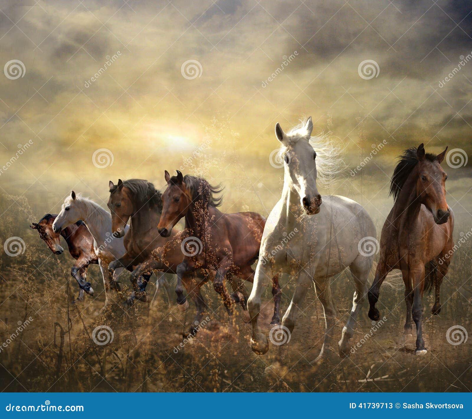 Troupeau de chevaux galopant gratuit au coucher du soleil - Chevaux gratuits ...