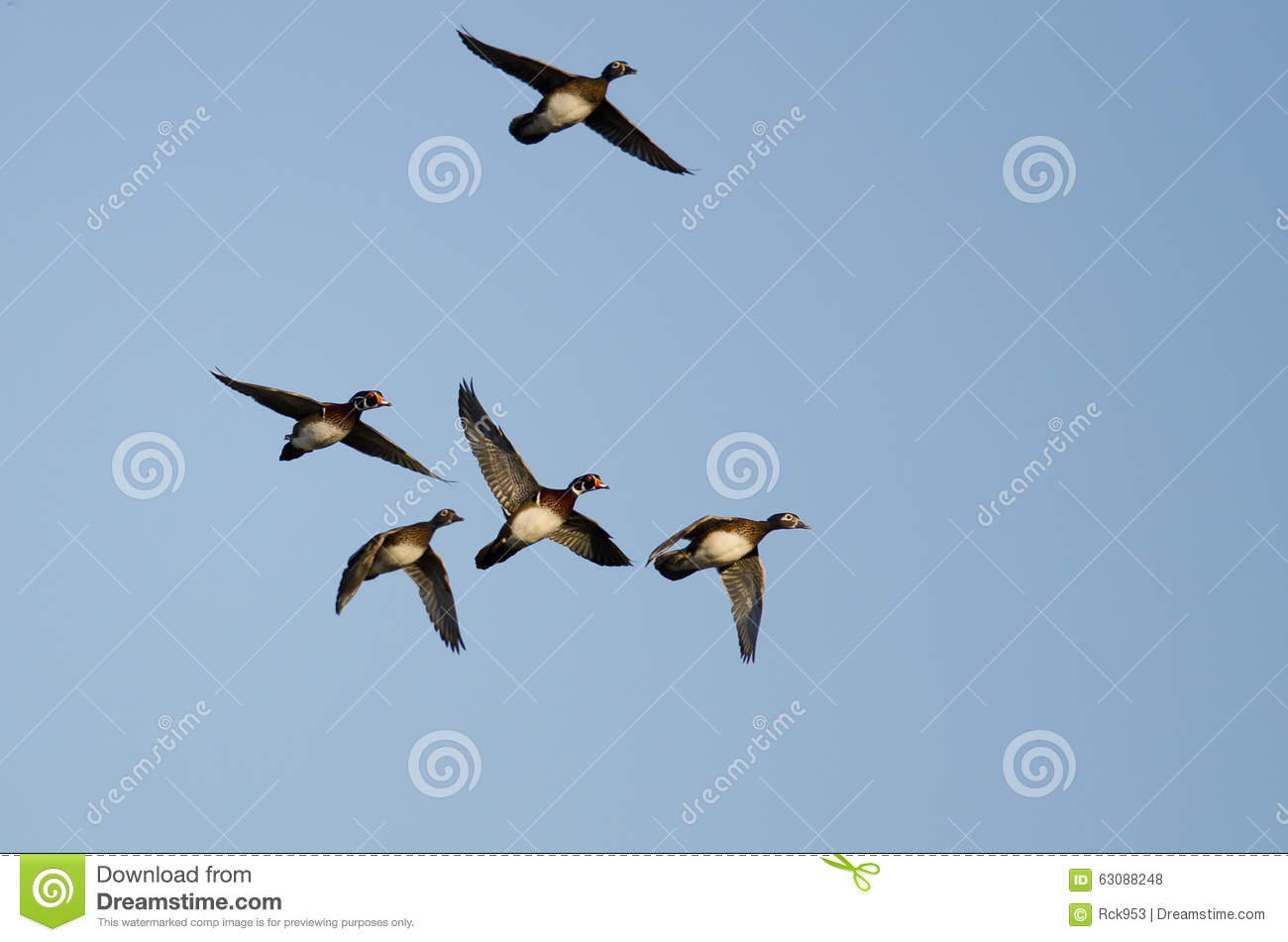 Download Troupeau Des Canards En Bois Volant Dans Un Ciel Bleu Photo stock - Image du nature, north: 63088248