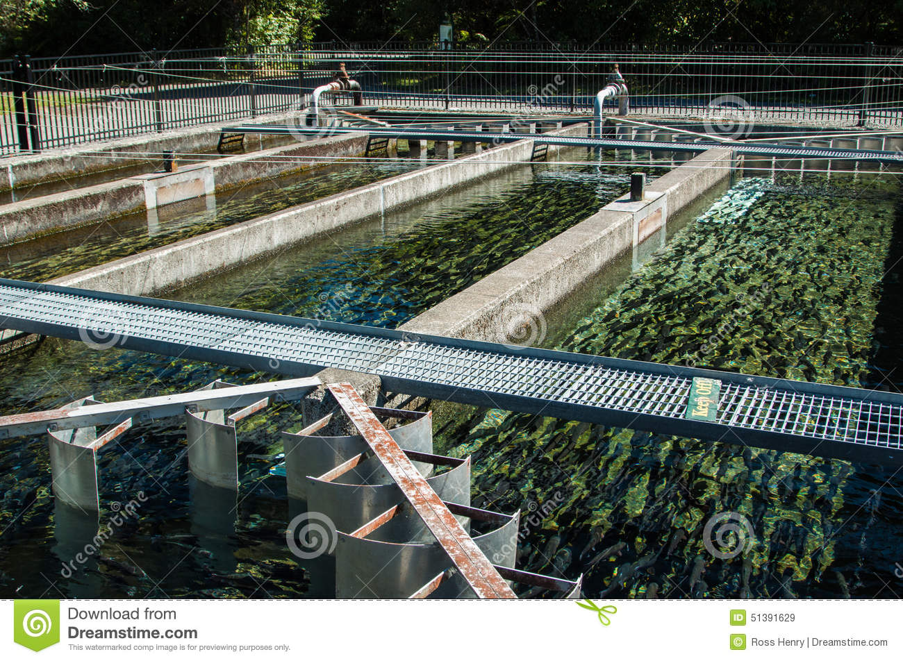 Trout farm ponds stock image image of many fishpond for Trout farm fishing