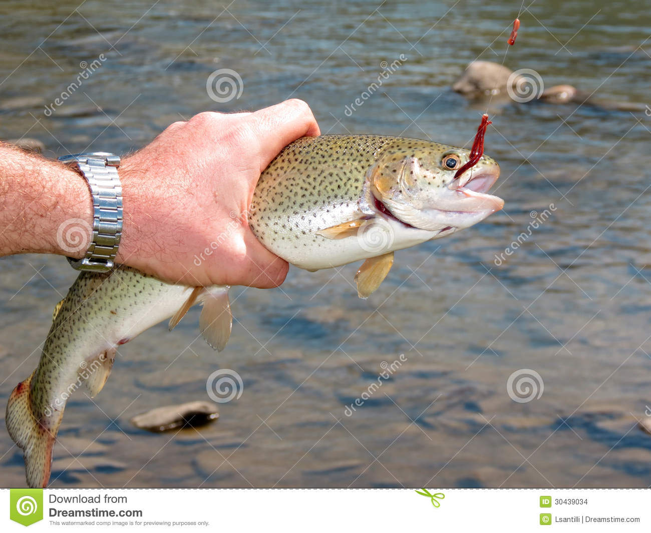 Trout fishing stock photo image of bite fisherman for Stocked trout fishing