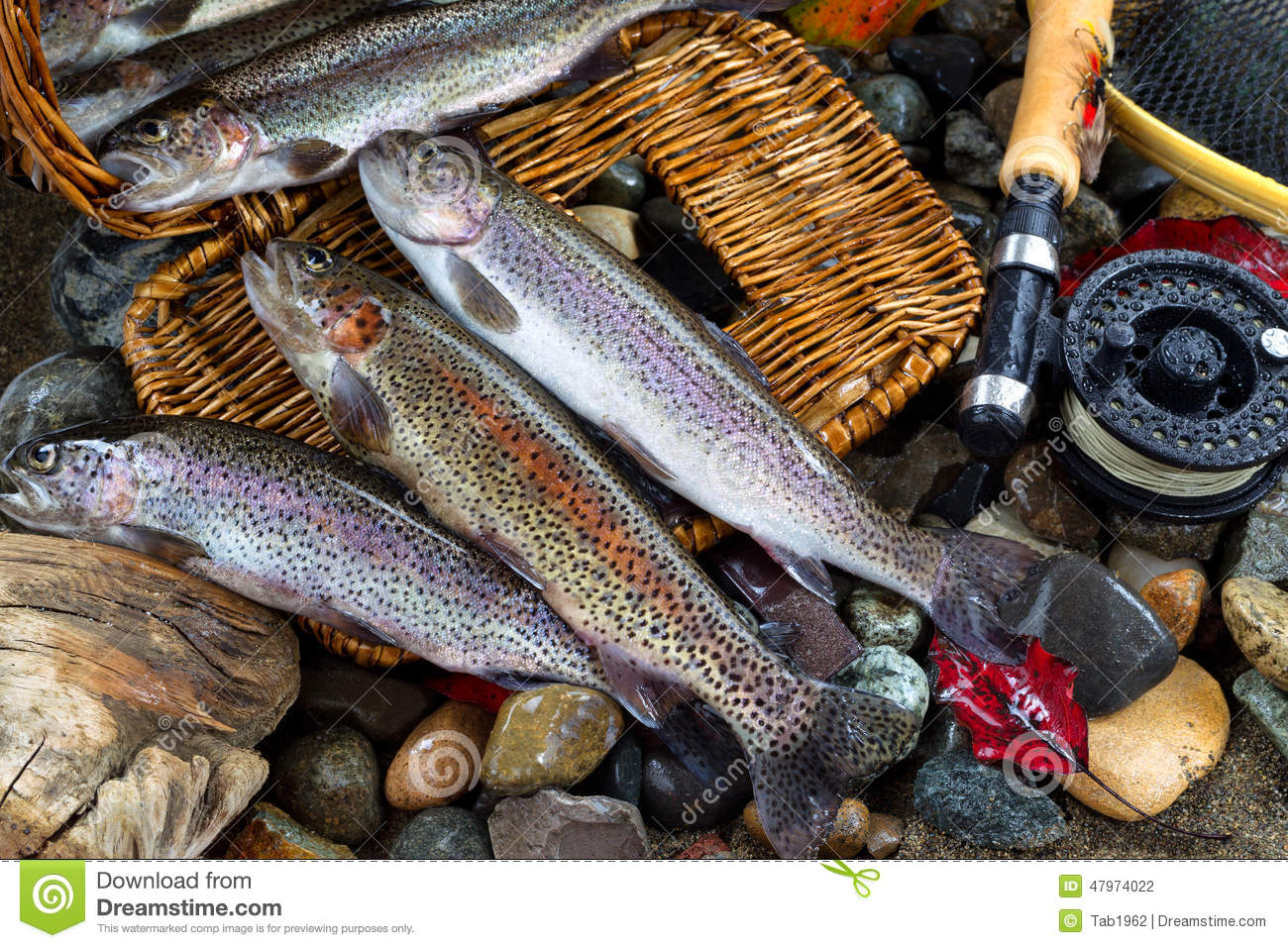 Trout spilling out of creel stock photo image 47974022 for Fly fishing creel