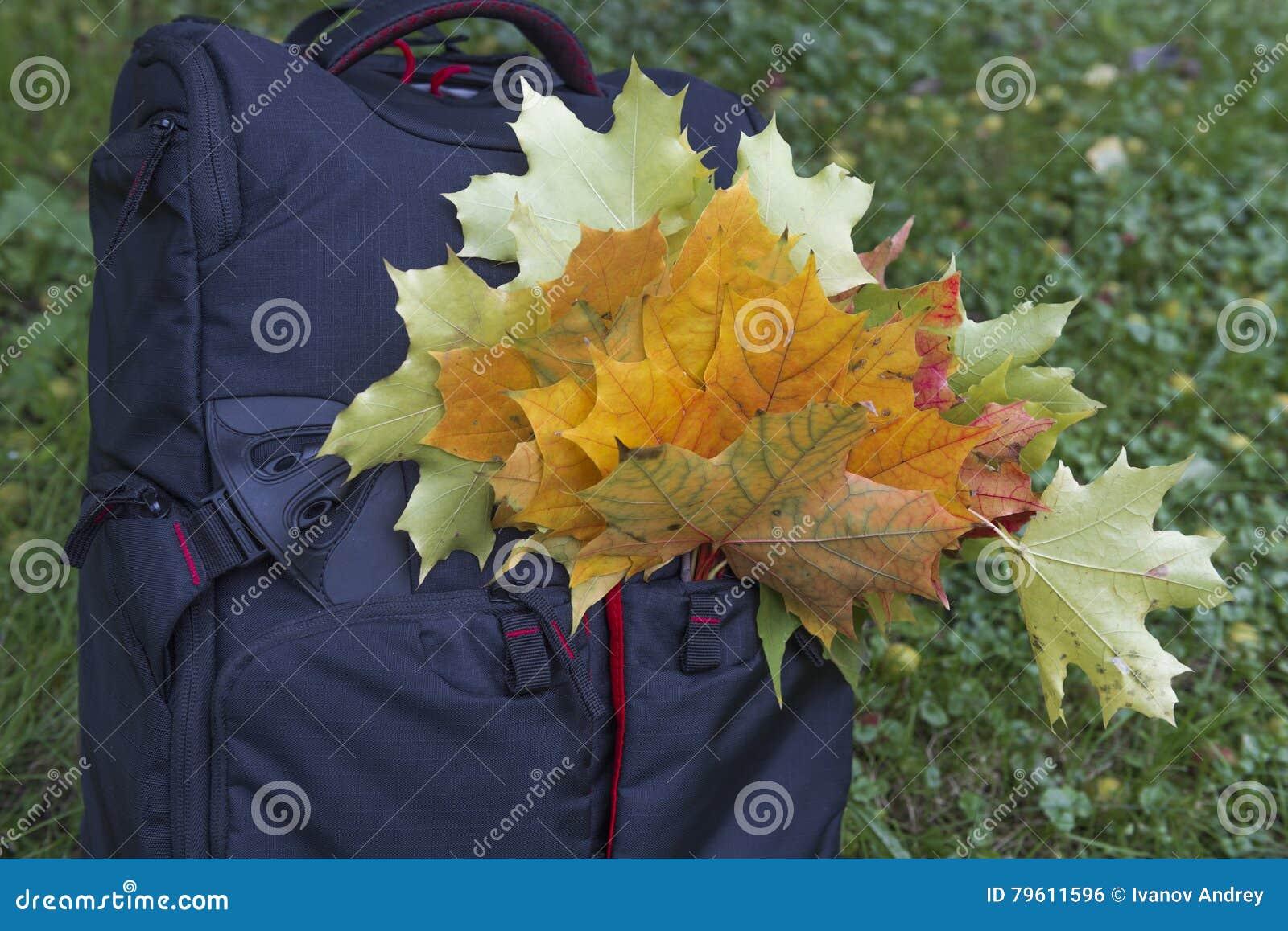 Trouxa completamente das folhas de outono