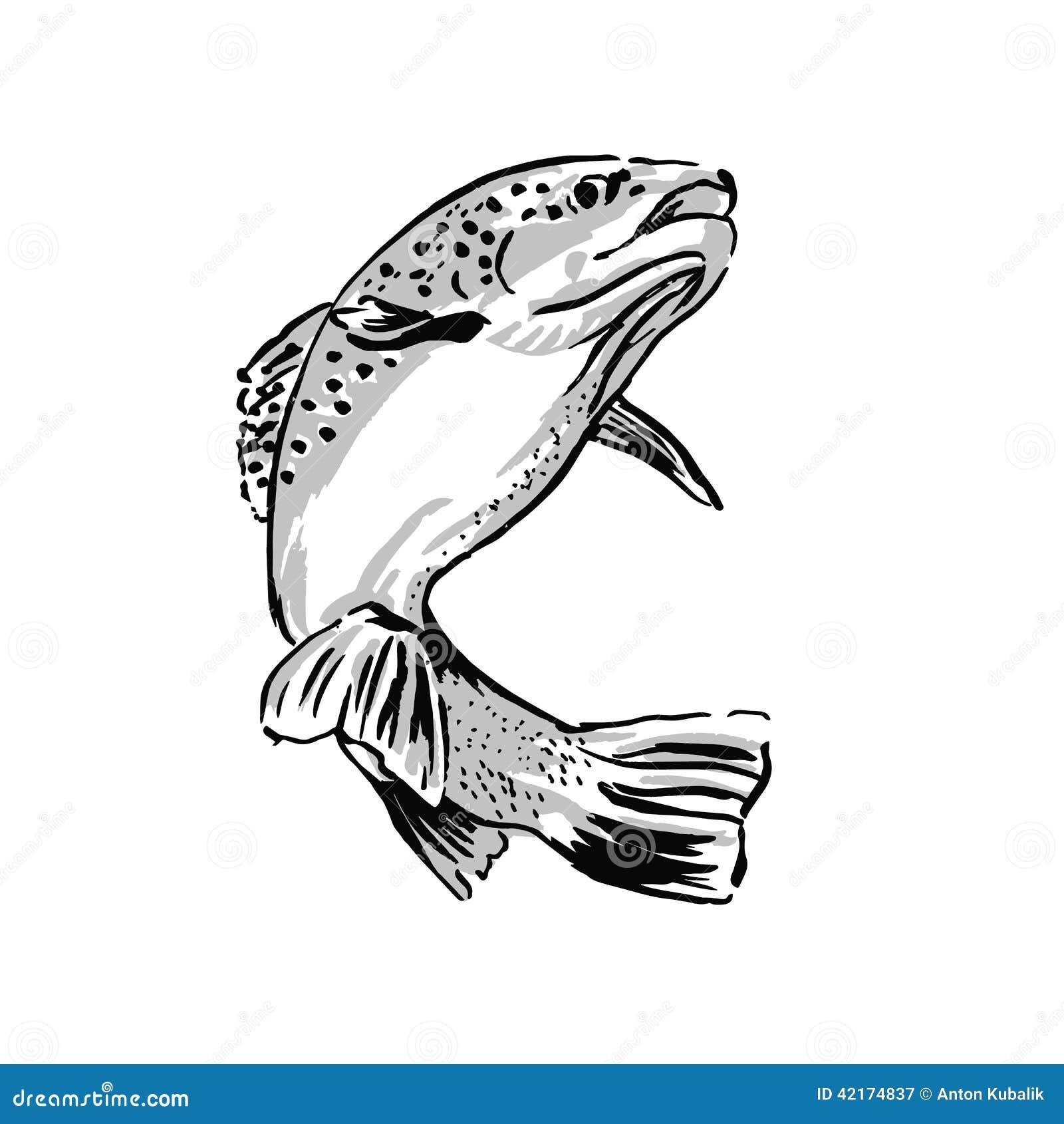 Kleurplaat Forel Trucha Del Dibujo Ilustraci 243 N Del Vector Imagen 42174837