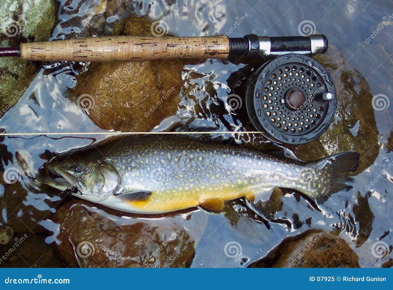Truite de ruisseau d or