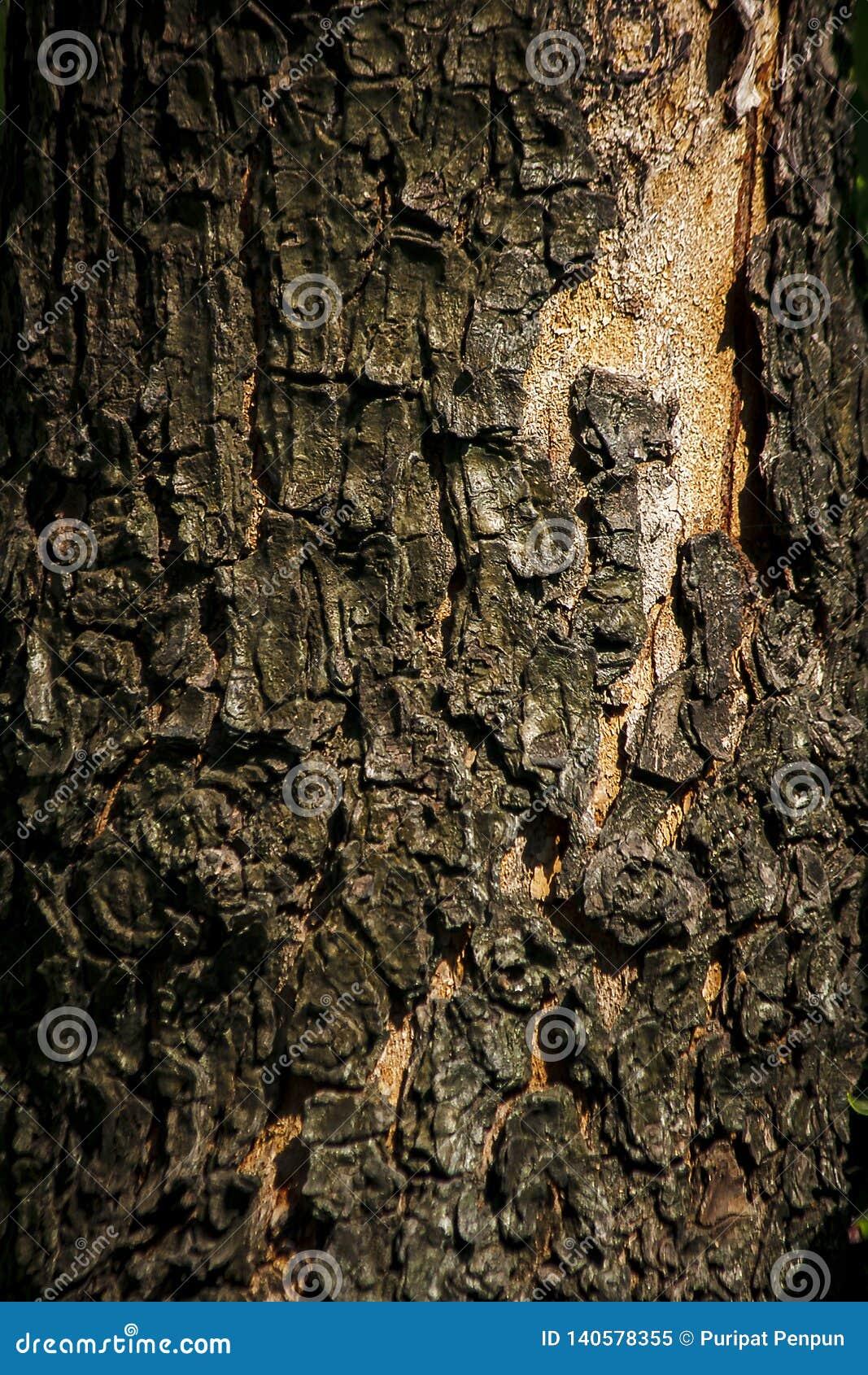 Trunk Bark Is Dry Rough Skin Wallpaper Stock Image Image Of Bark Environment 140578355