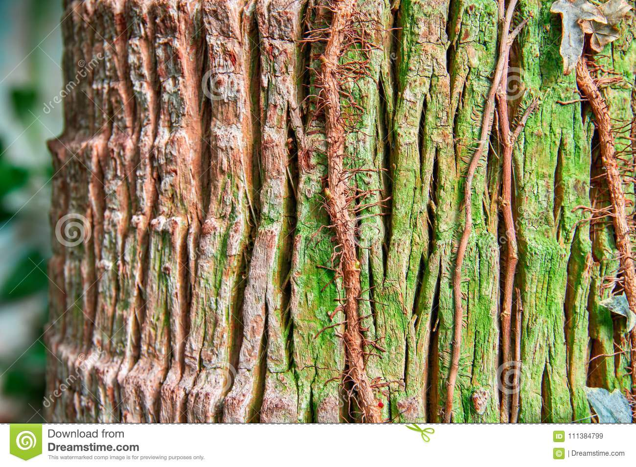 Trunk Tropical Tree With Cracked Bark Light Brown And Green Colors ...