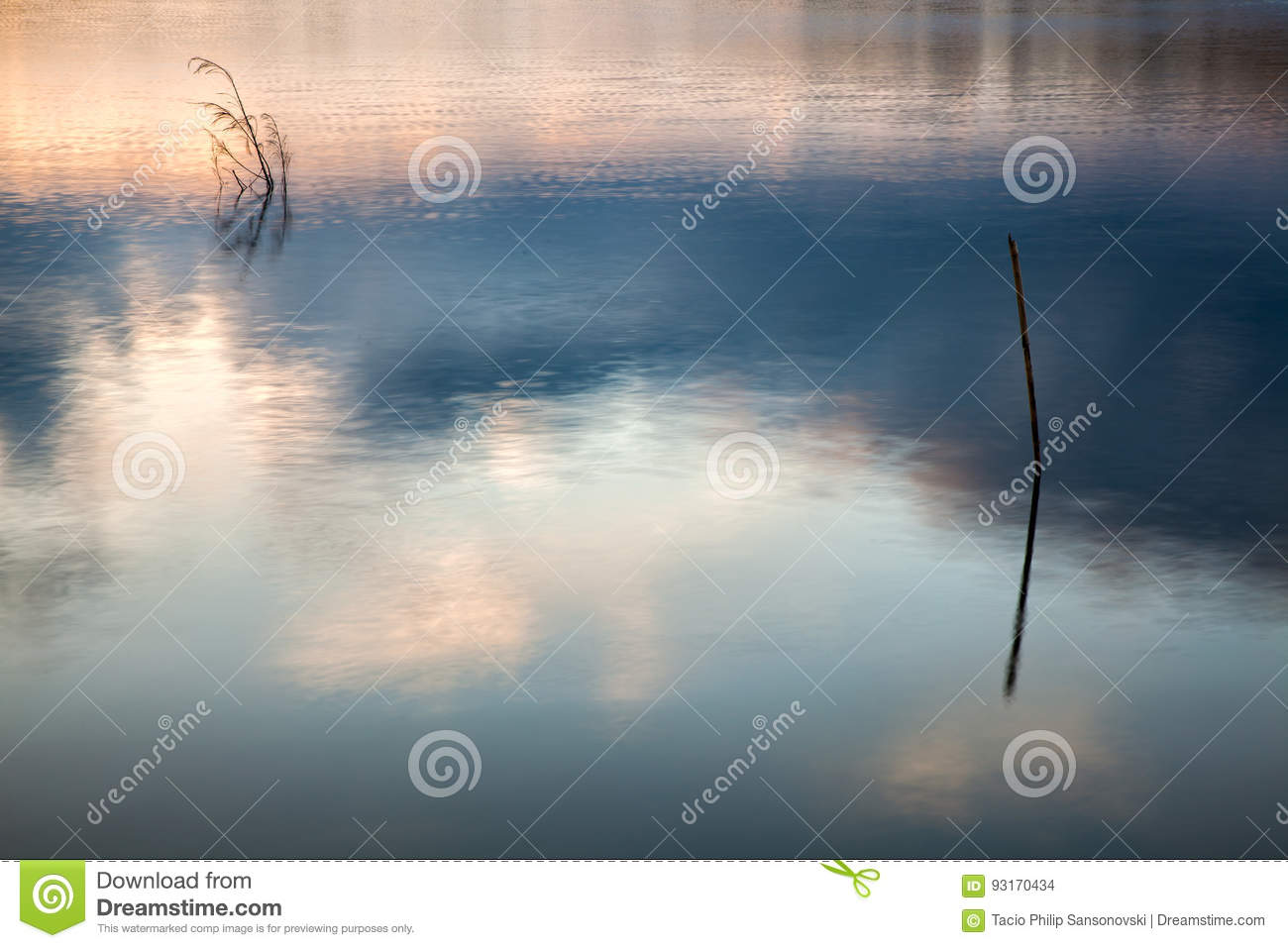 Trunks in water lake with sky reflections