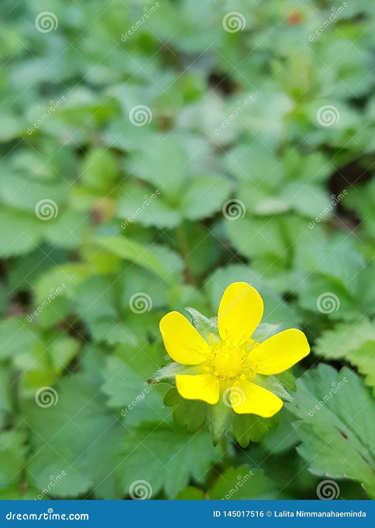 Truskawkowy kwiat