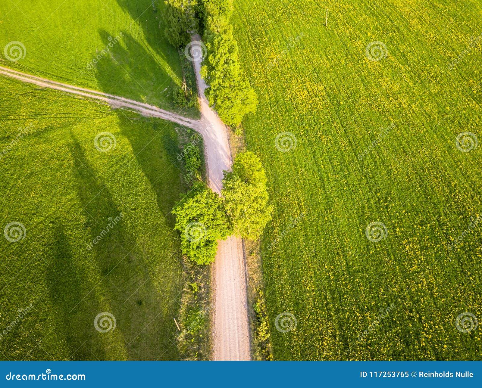 Truteń fotografia rozdroże Między drzewami w Kolorowym Wczesnym Spr