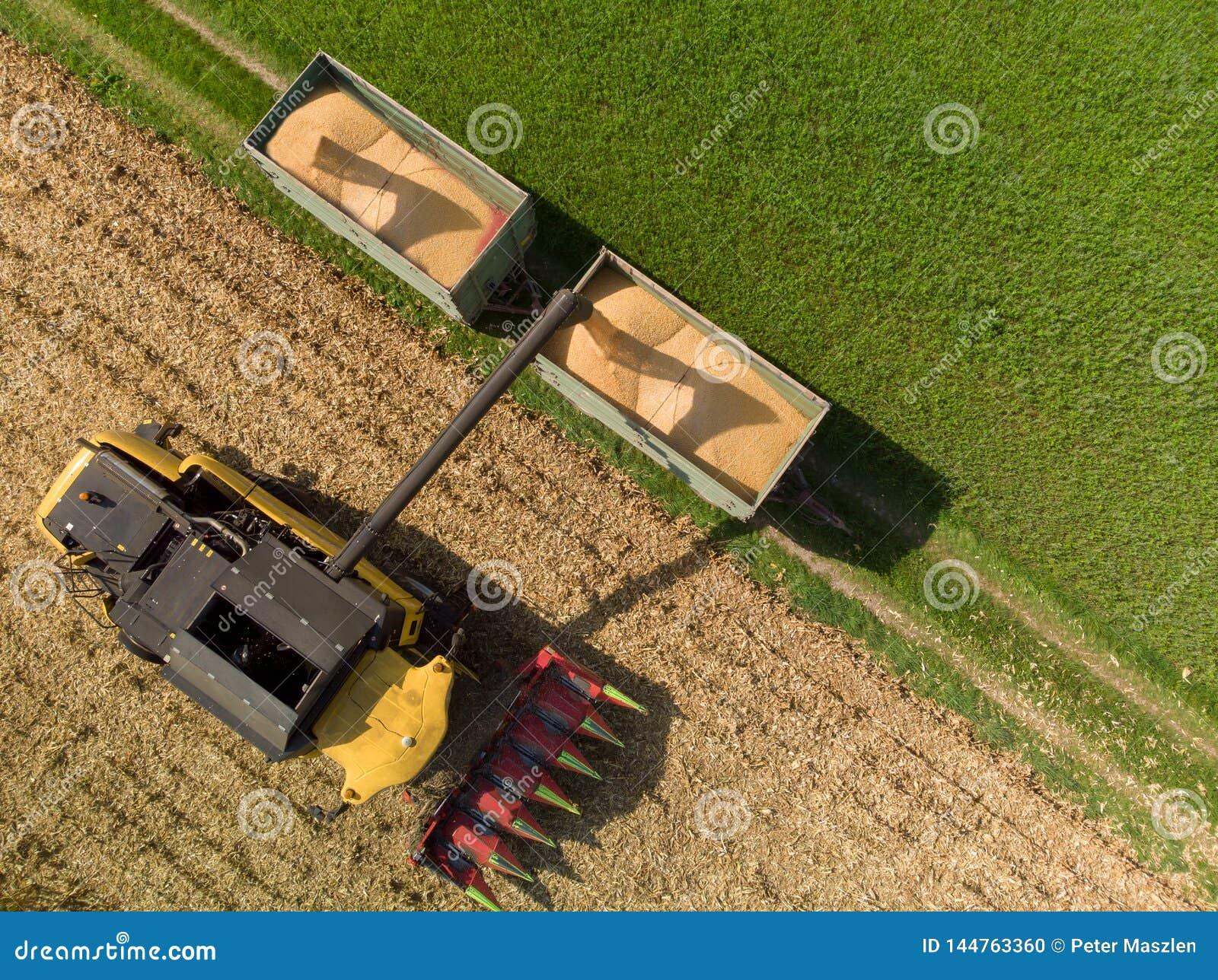 Trutnia widok ładuje z kukurudzy na przyczepach żniwiarz